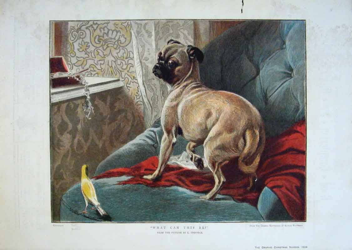 Print A Dog & Canary Fine Art By Steffeck 1884 82Bbb1 Old Original