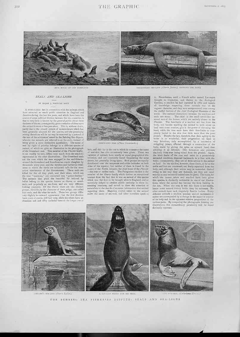 Print Behring Sea Fisheries Dispute Seals & Sea Lions 1893 02Bbb1 Old Original