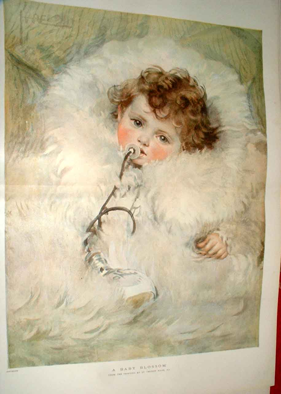 Print A Baby Blossom Fine Art 1896 By Hare 07Tbbb1 Old Original
