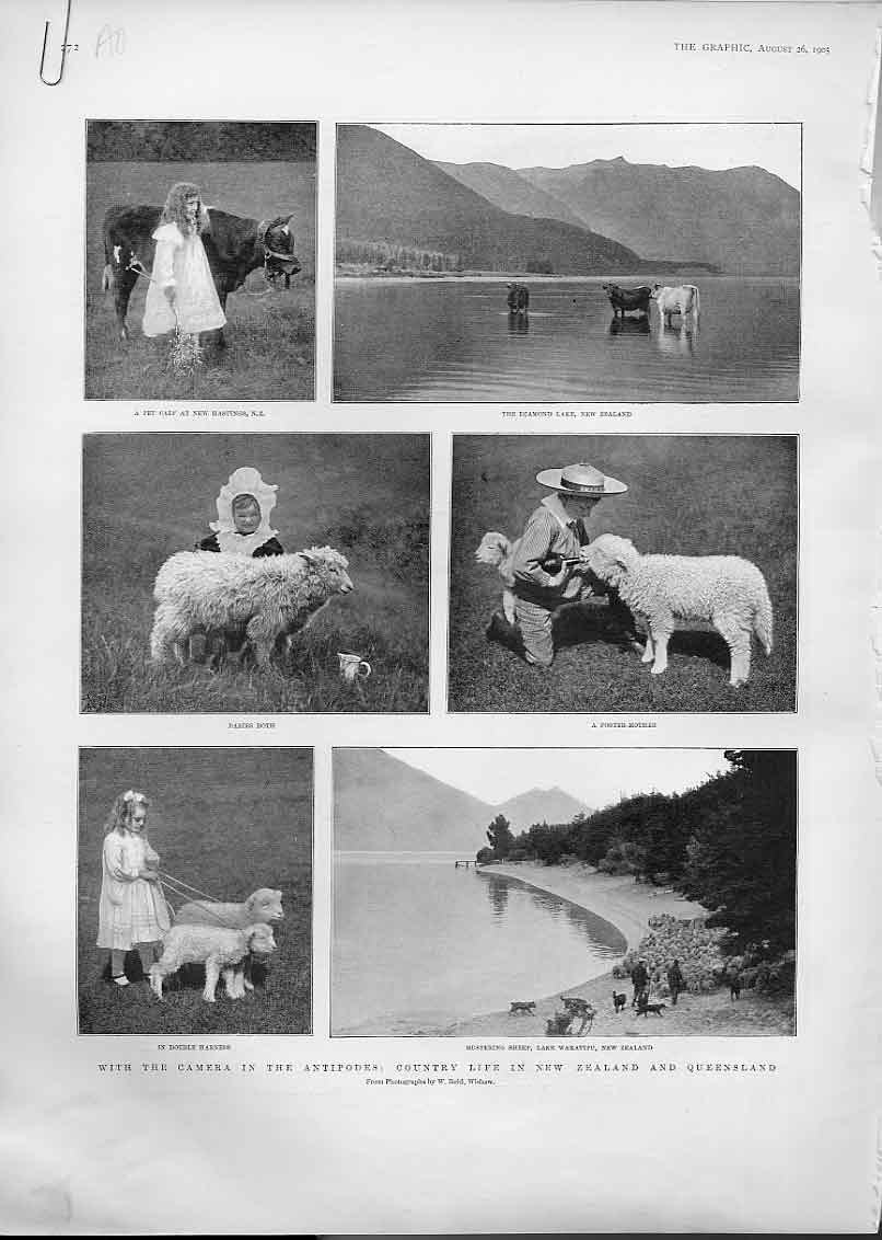 Print 1905 Camera In New Zealand & Queensland 72Abbb1 Old Original