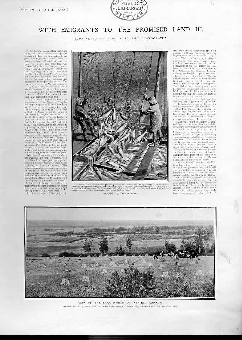 Print Unloading Salmon Trap Fraser River Canadia 1905 26Bbb1 Old Original