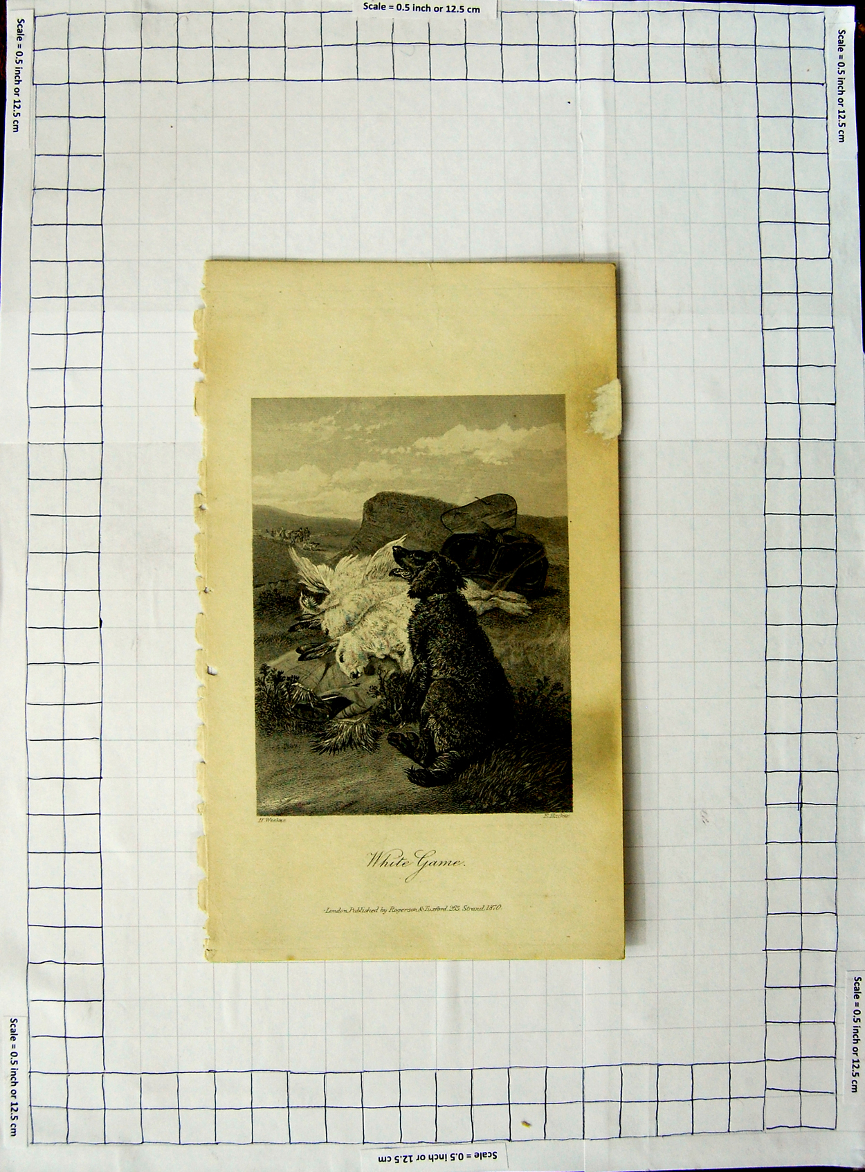 [Print 1870 Engraving White Game Dog Hunting Rabbits 529E381 Old Original]