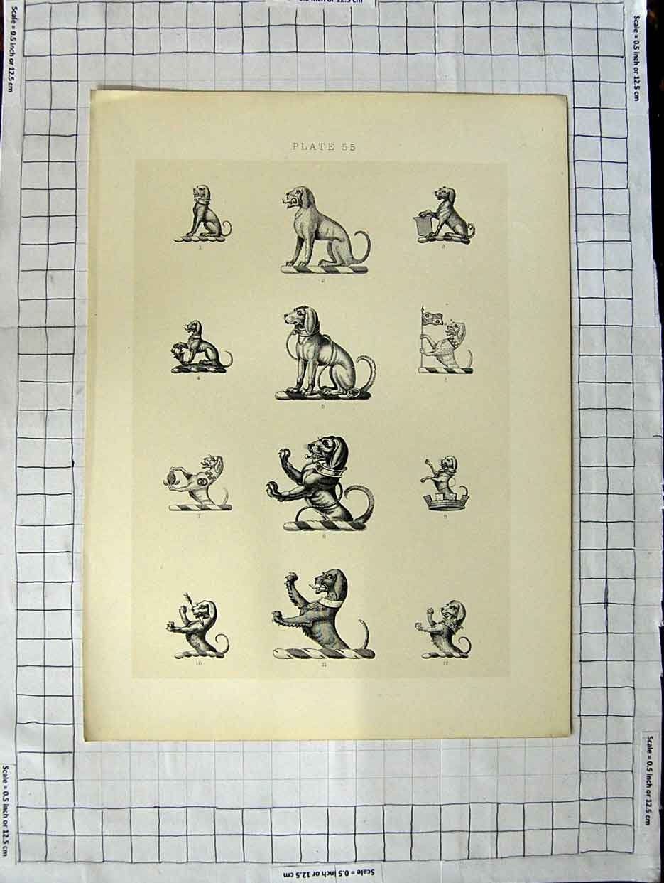 [Print A Plate Heraldry Crests C1790-C1900 Wild Dogs 150G106 Old Original]