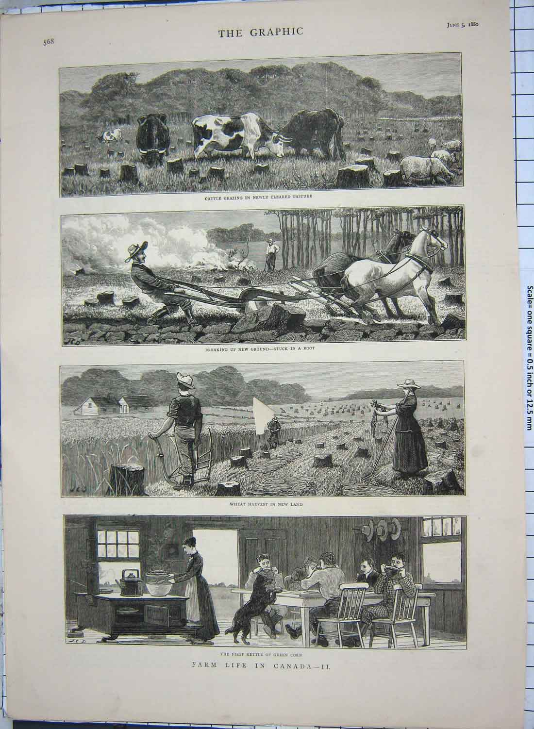 [Print 1880 Farm Life Canada Cattle Ploughing Harvest Kettle 133G180 Old Original]