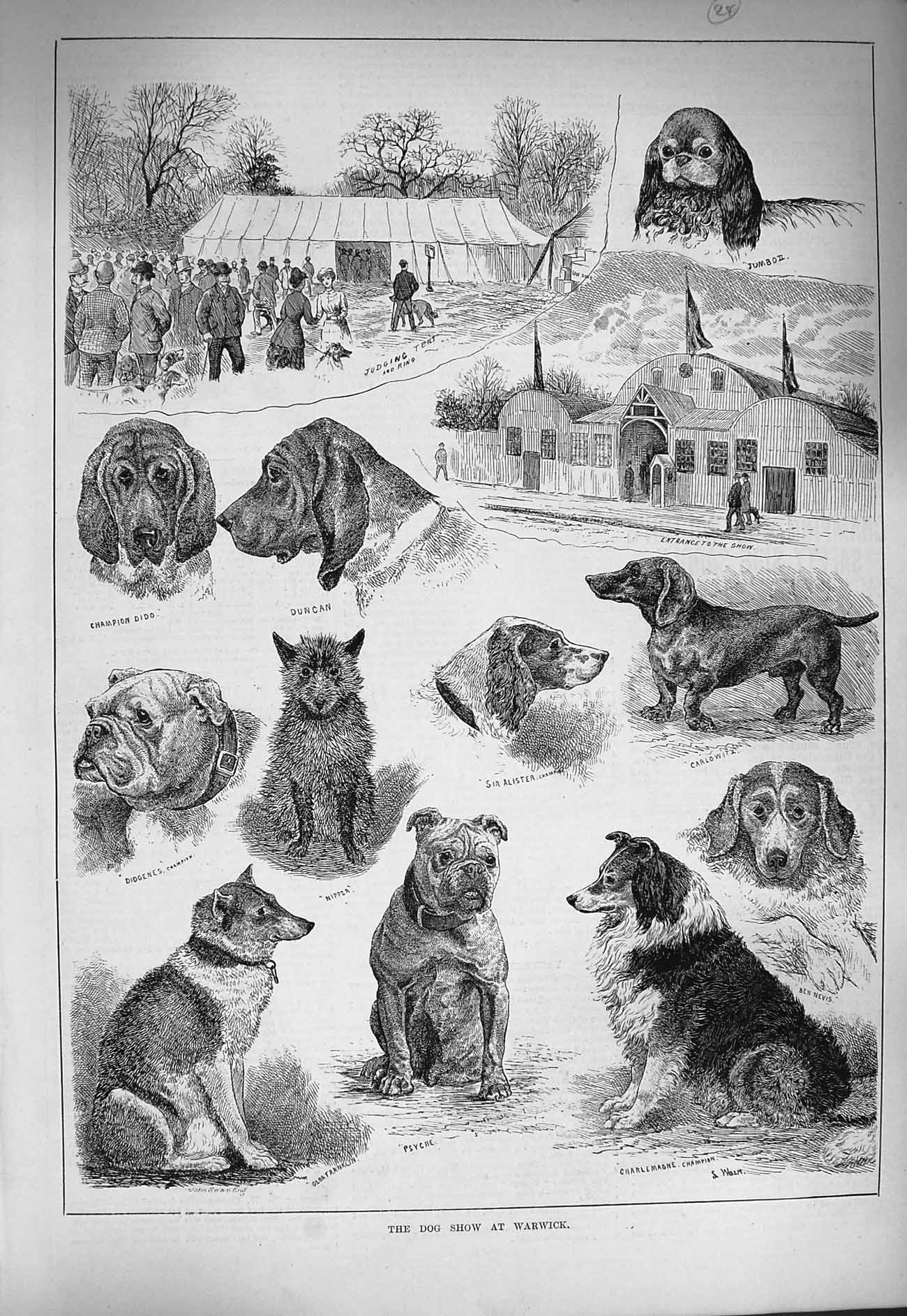 [Print 1884 Dog Show Warwick Psyche Nipper Duncan Alister 147G275 Old Original]