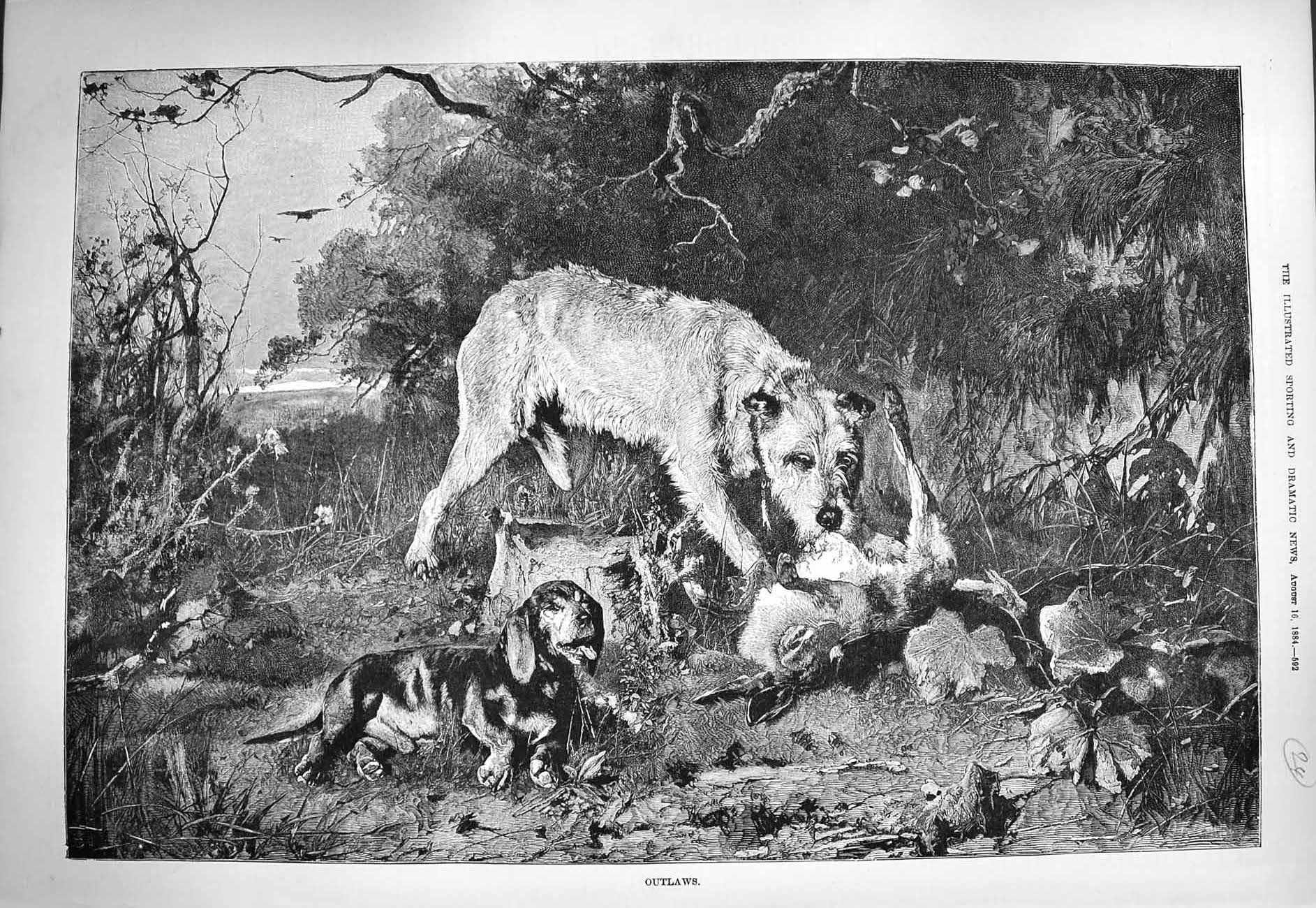[Print 1884 Outlaws Dead Rabbit Dogs Eating Countryside 592G275 Old Original]