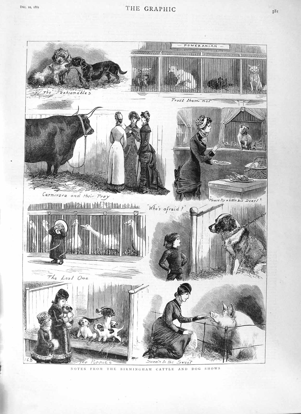 [Print 1881 Birmingham Cattle Dog Show Pigs Animals 581M124 Old Original]