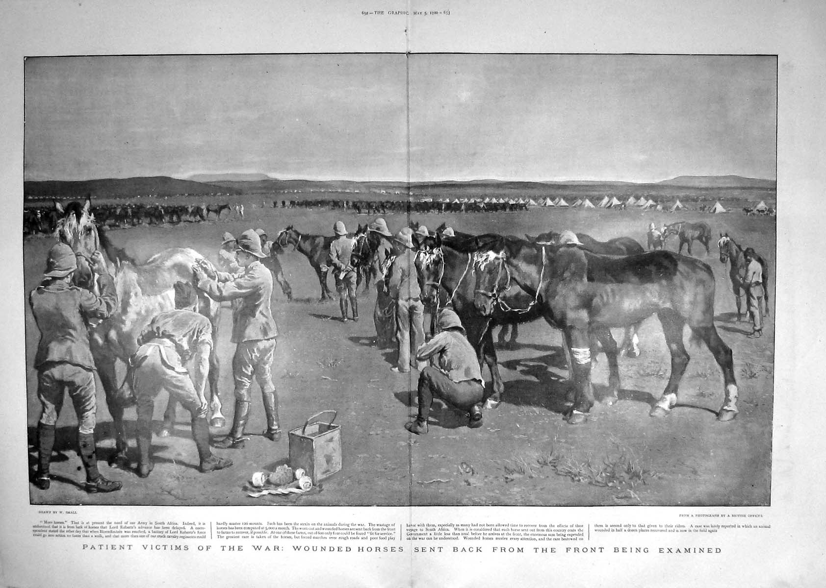 [Print 1900 War Wounded Horses Soldiers Army South Africa 651Tm161 Old Original]