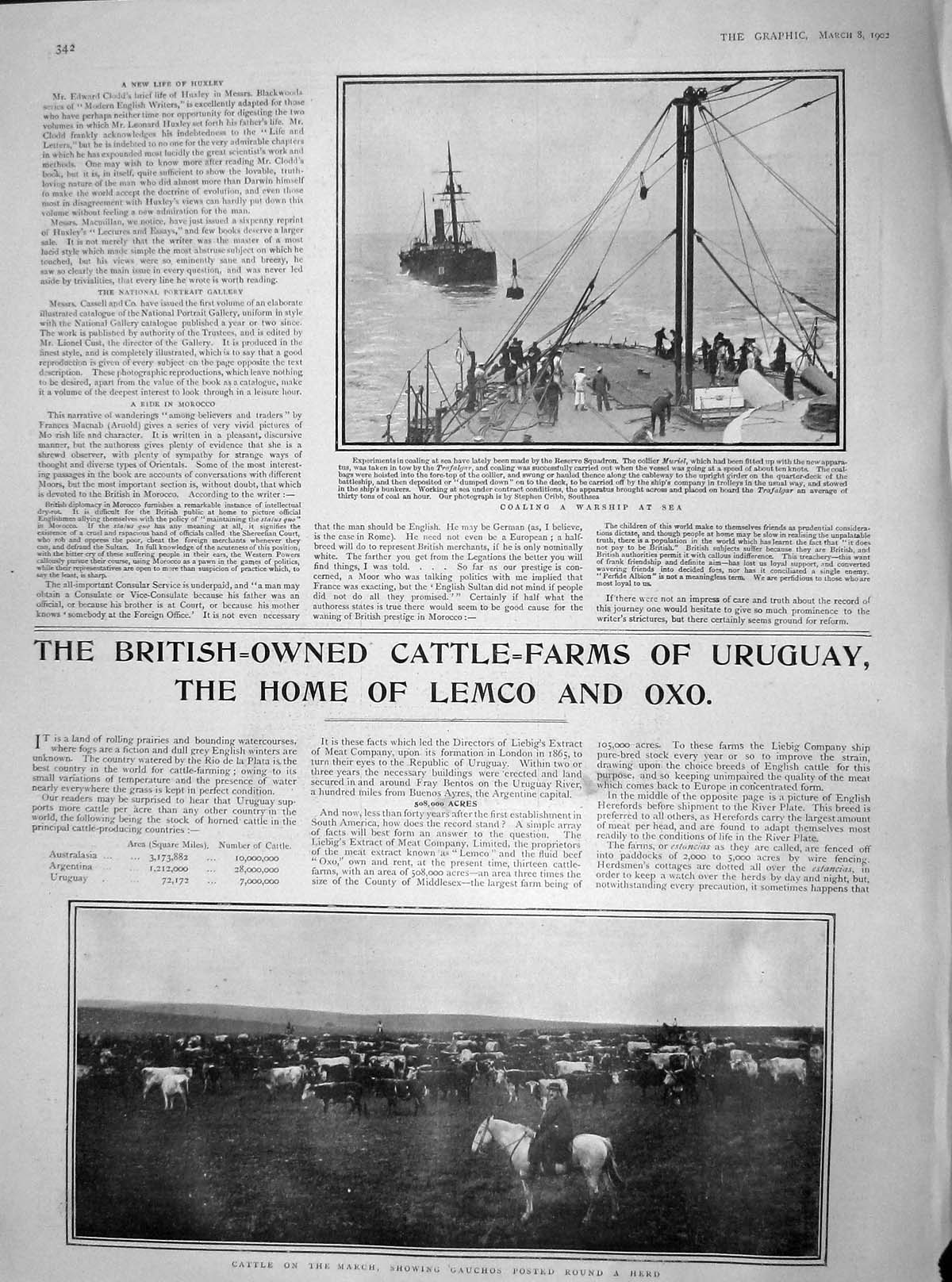 [Print 1902 Coaling War Ship Muriel Trafalgar Cattle Gauchos 342M165 Old Original]