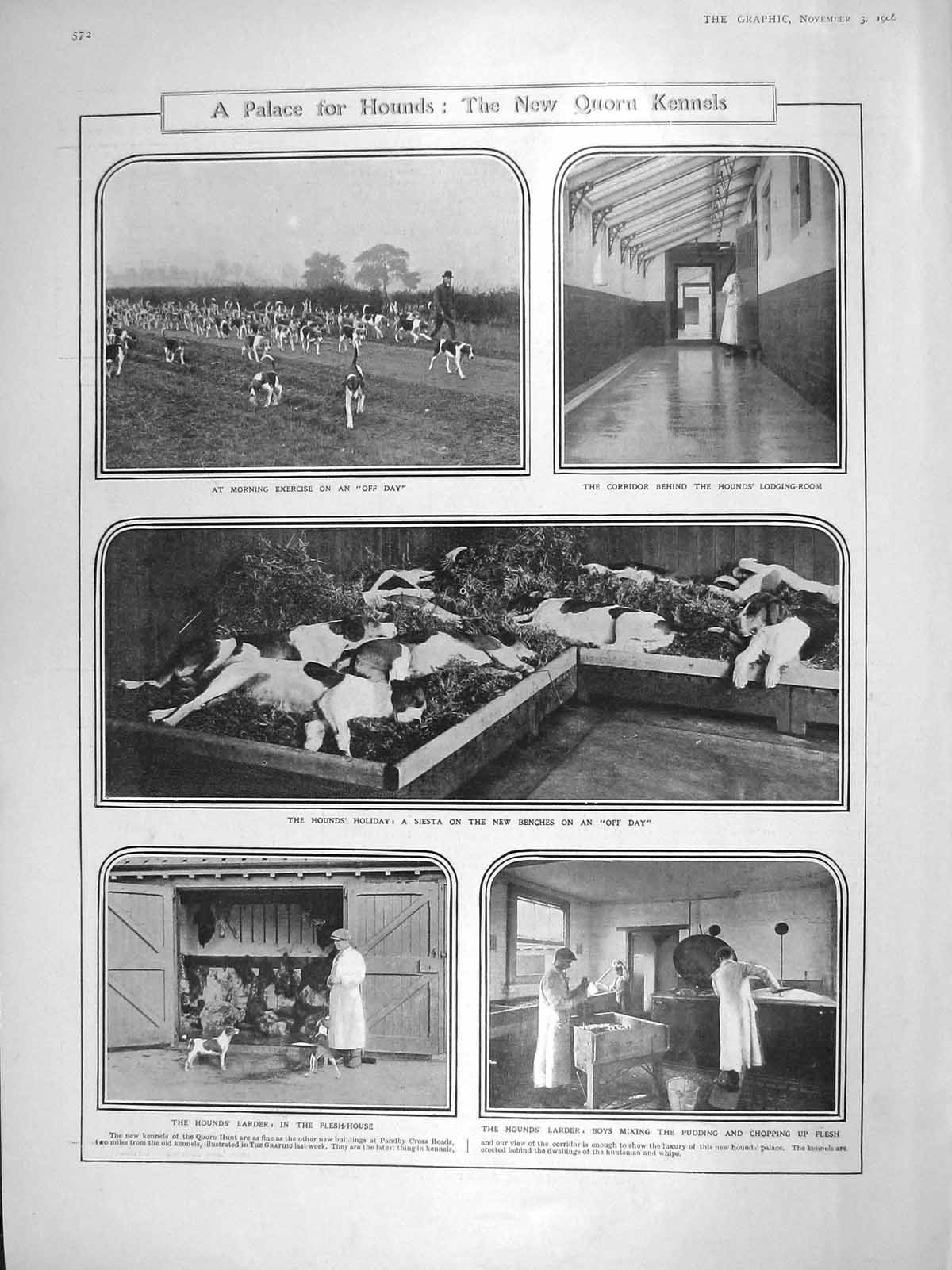 [Print 1906 Quorn Kennels Hounds Dogs Parliament Carson Burns 572M174 Old Original]