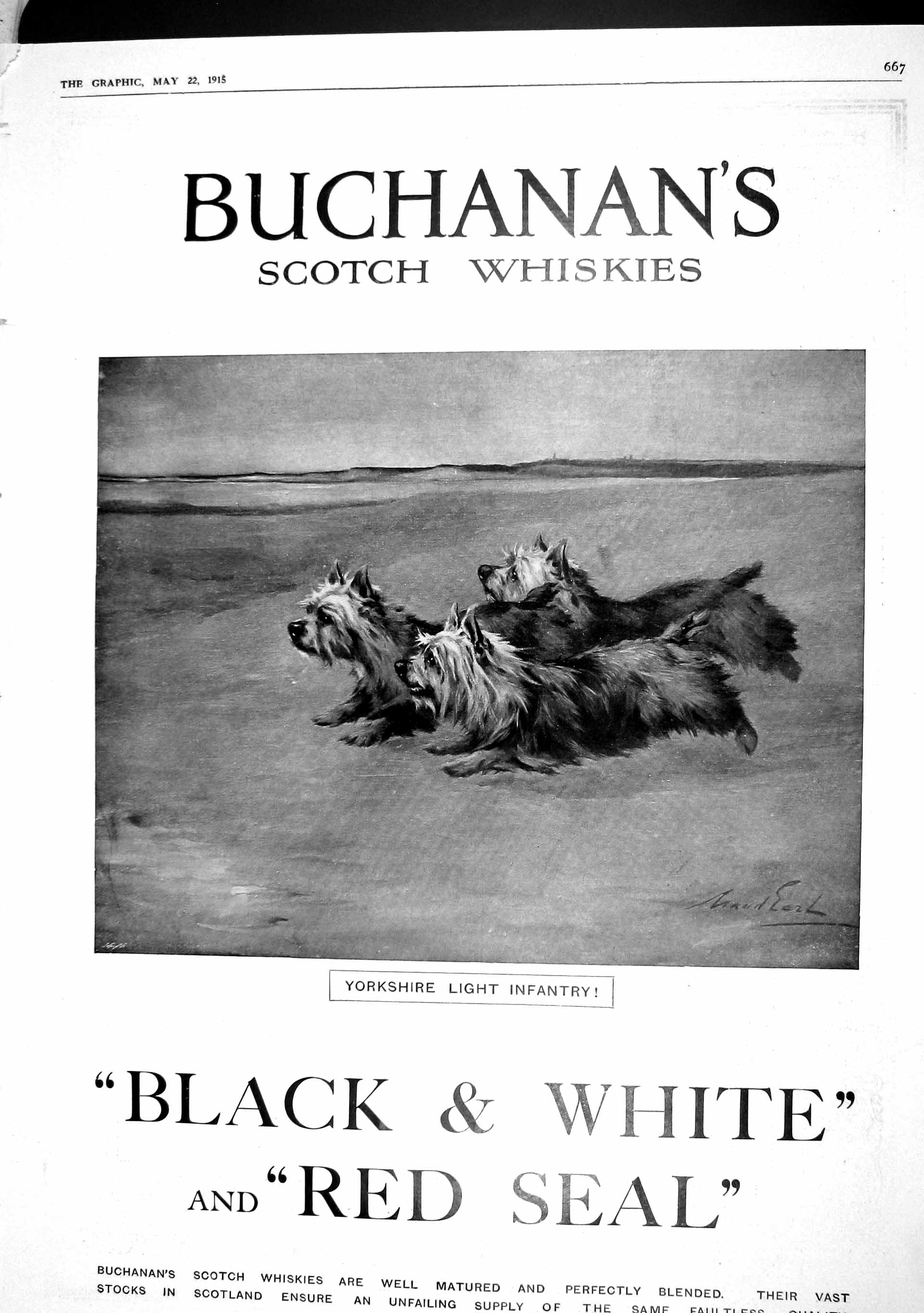 [Print 1915 Advertisement Buchanans Scotch Whisky Dogs 667M191 Old Original]