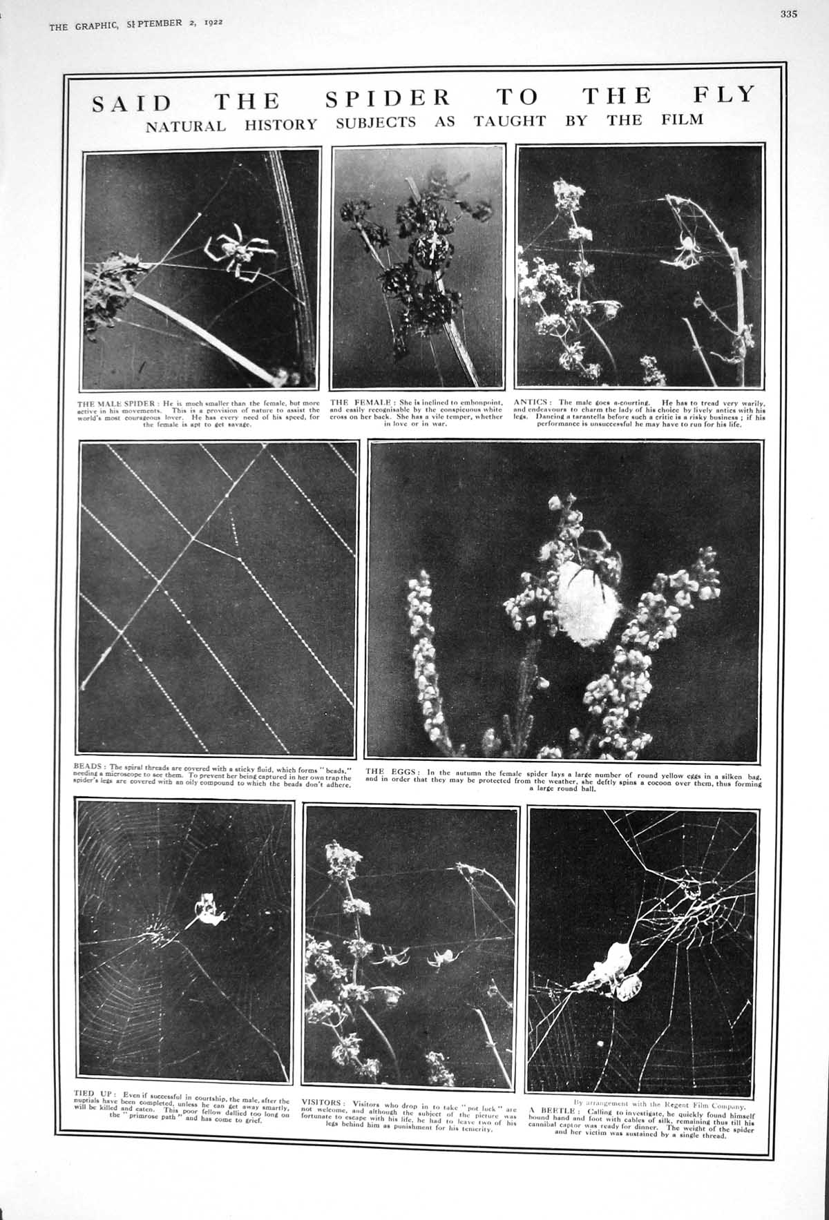[Print 1922 Spider Webb Eggs Beetle Insects Culbin Sands Moray Firth Sco 335M206 Old Original]