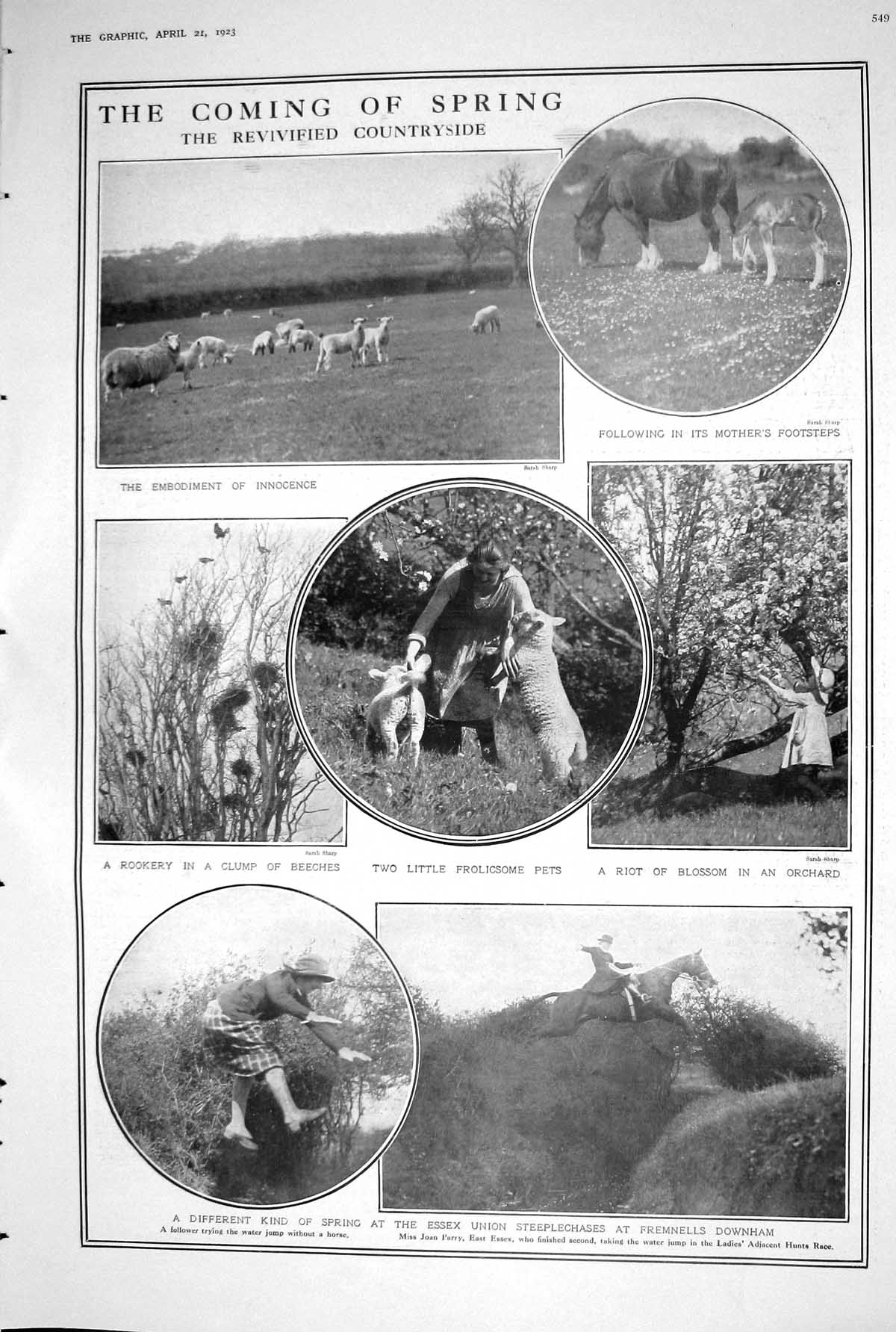 [Print 1923 Countryside Sheep Horses Blossom Orchard Steeplechases Egypt 549M207 Old Original]