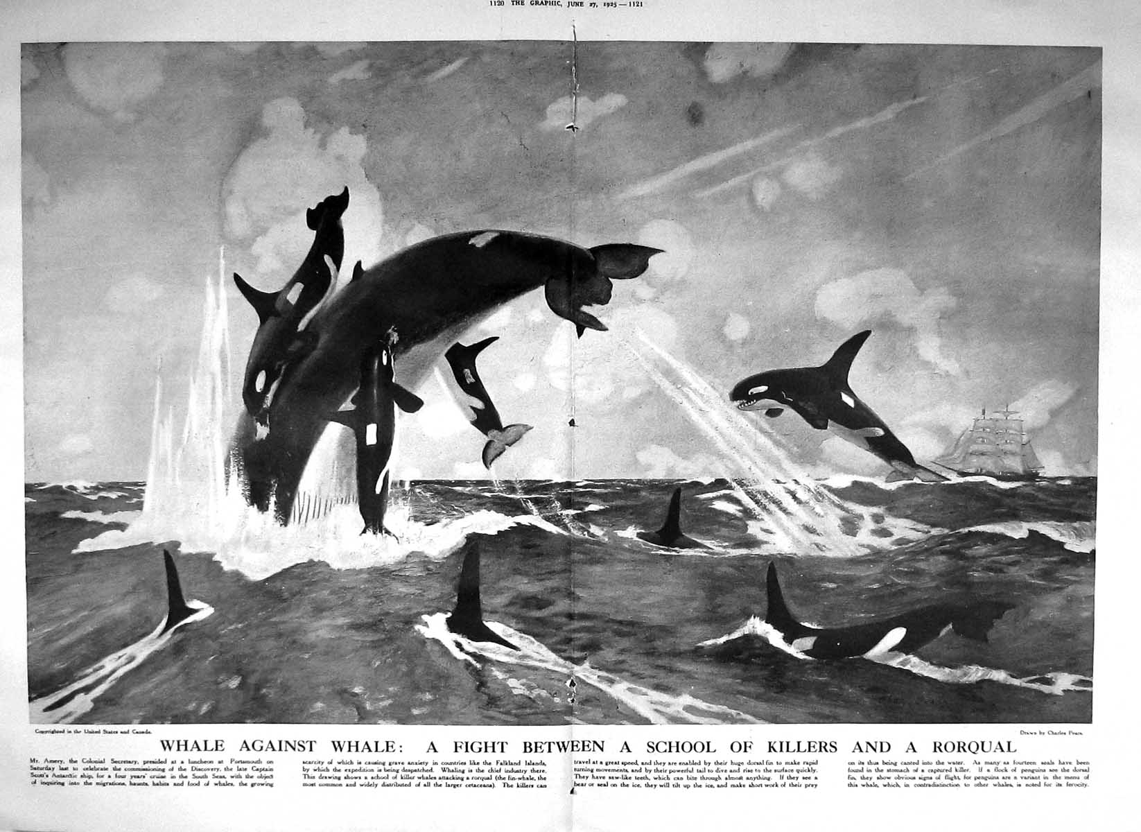 [Print 1925 Sailor Gardener Louis Restaurant Ship School Killer Whales R 1120M211 Old Original]