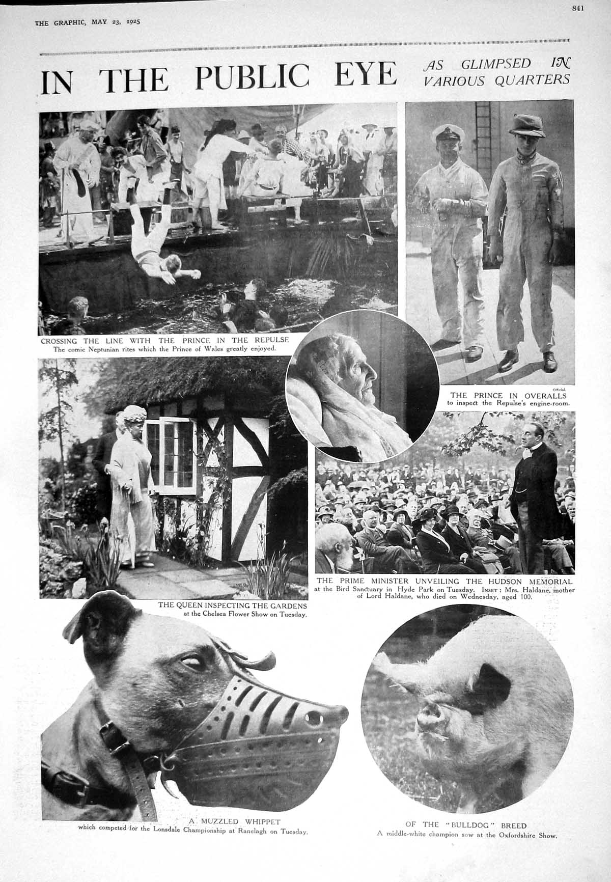 [Print 1925 Prince Wales Queen Chelsea Flower Show Muzzled Whippet Dog P 841M211 Old Original]