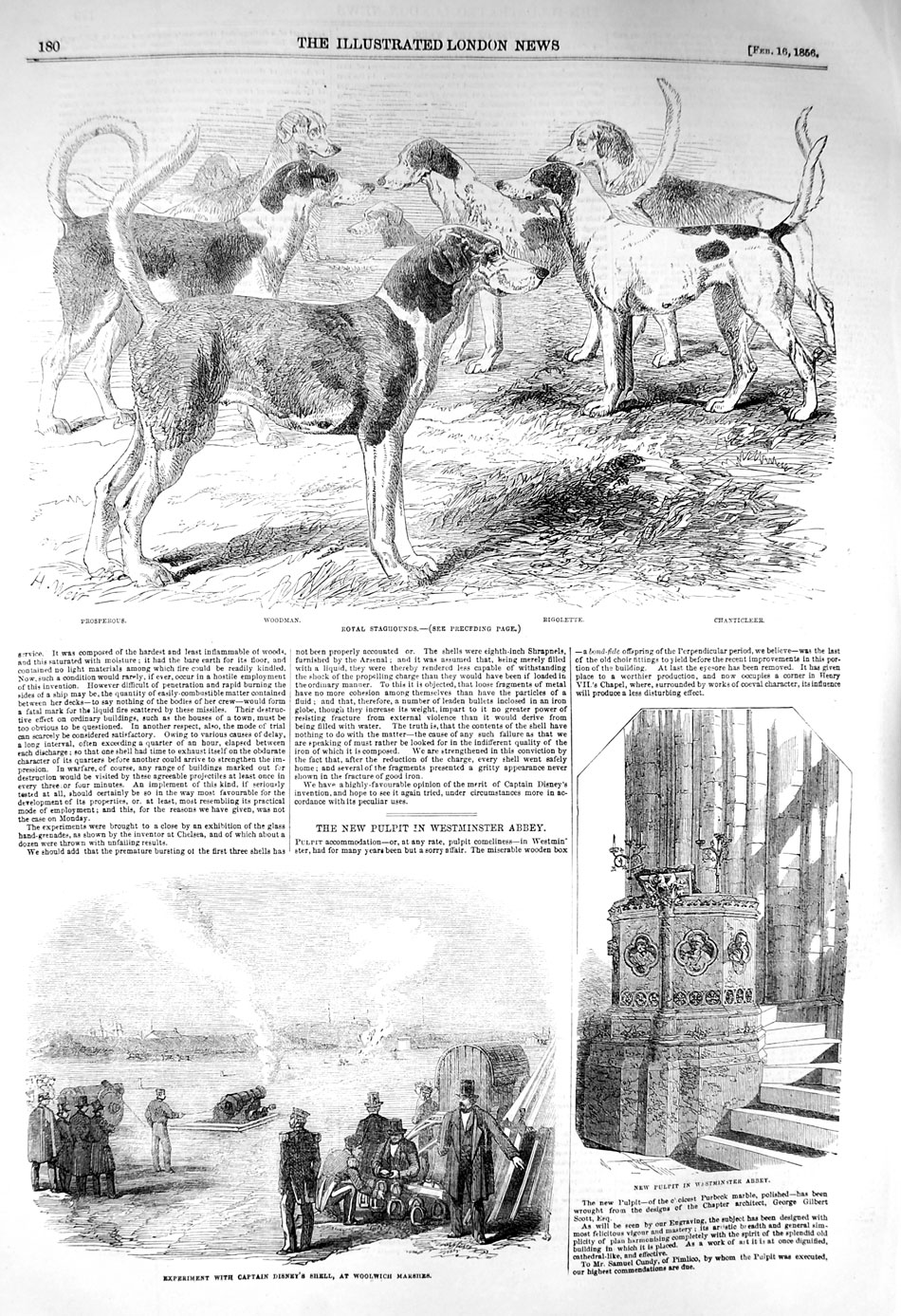 [Print 1856 Royal Staghounds Dogs Captain Disney Westminster 180P128 Old Original]