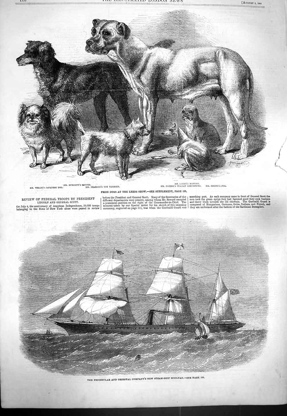 [Print 1861 Prize Dogs Leeds Show Terrier Steam Ship Mooltan 110P139 Old Original]