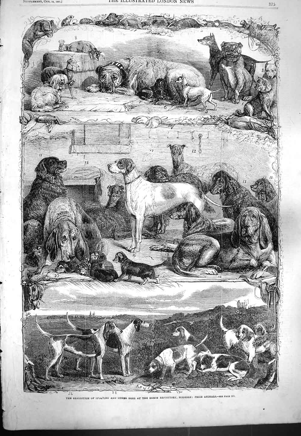 [Print 1861 Exhibition Sporting Dogs Horse Repository Holborn 375P139 Old Original]