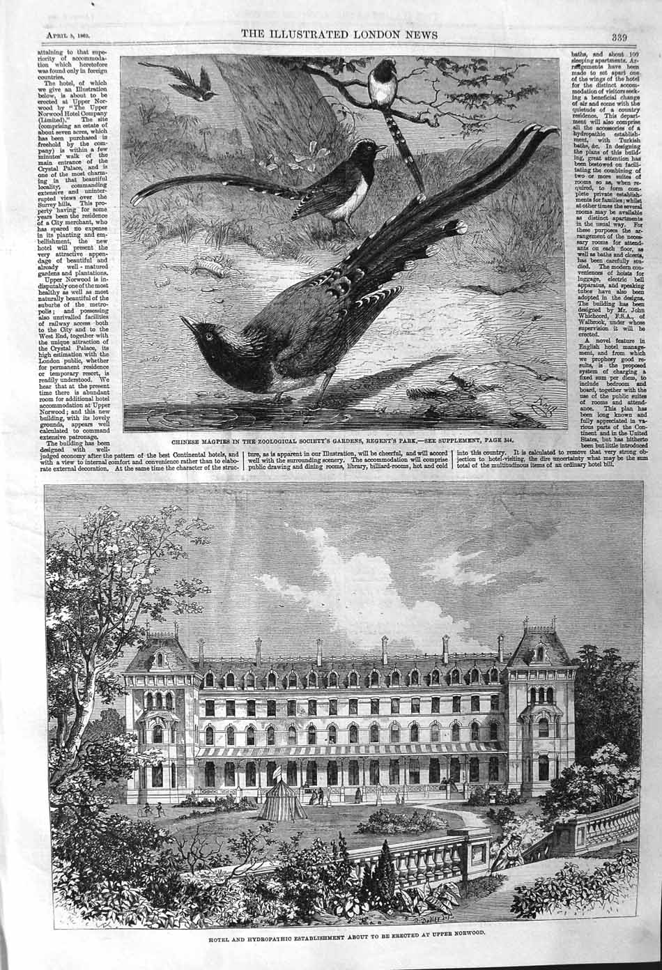[Print 1862 Hotel Hydropathic Building Norwood Chinese Magpies  Old Original]