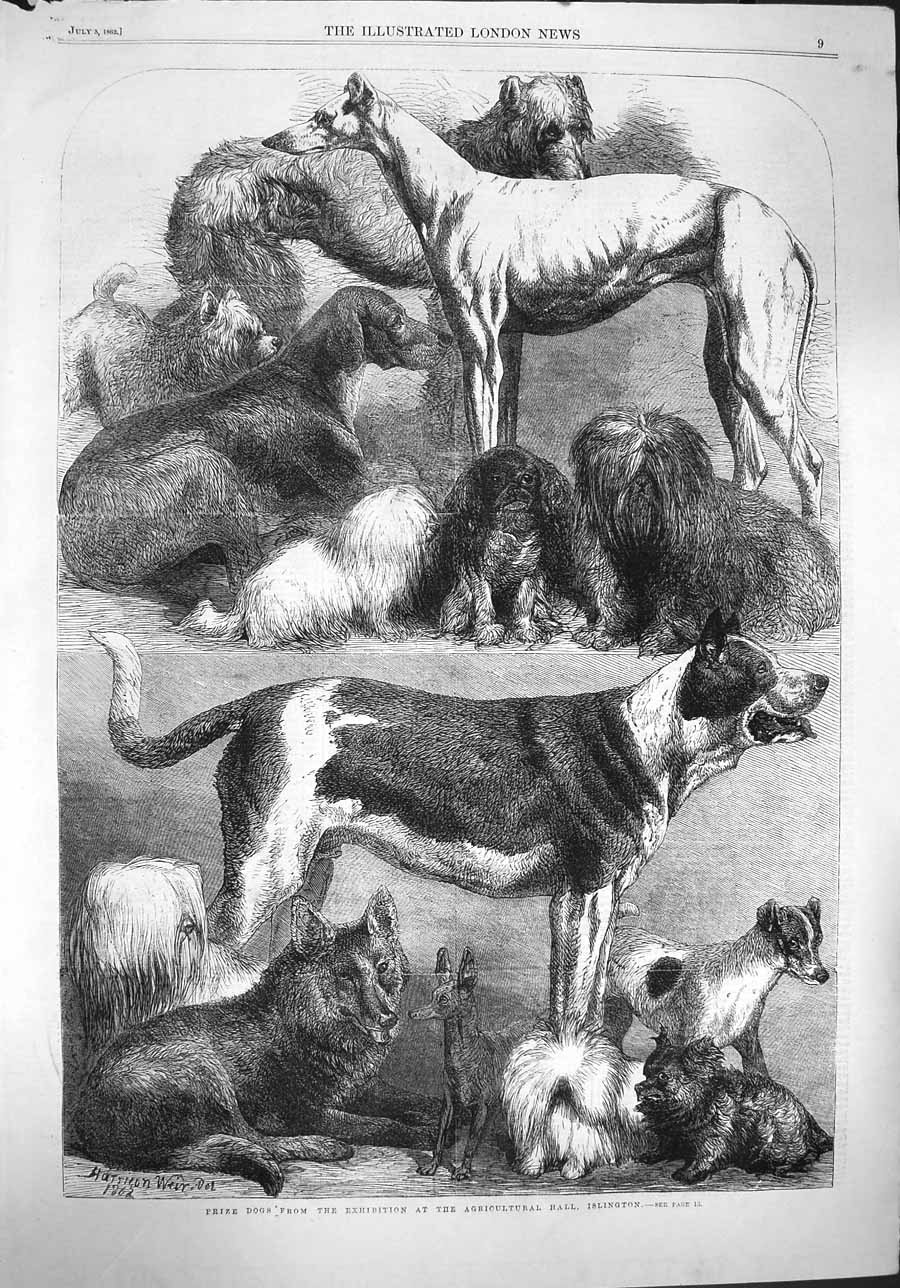 [Print 1862 Prize Dogs Exhibition Agricultural Hall Islington 009P141 Old Original]