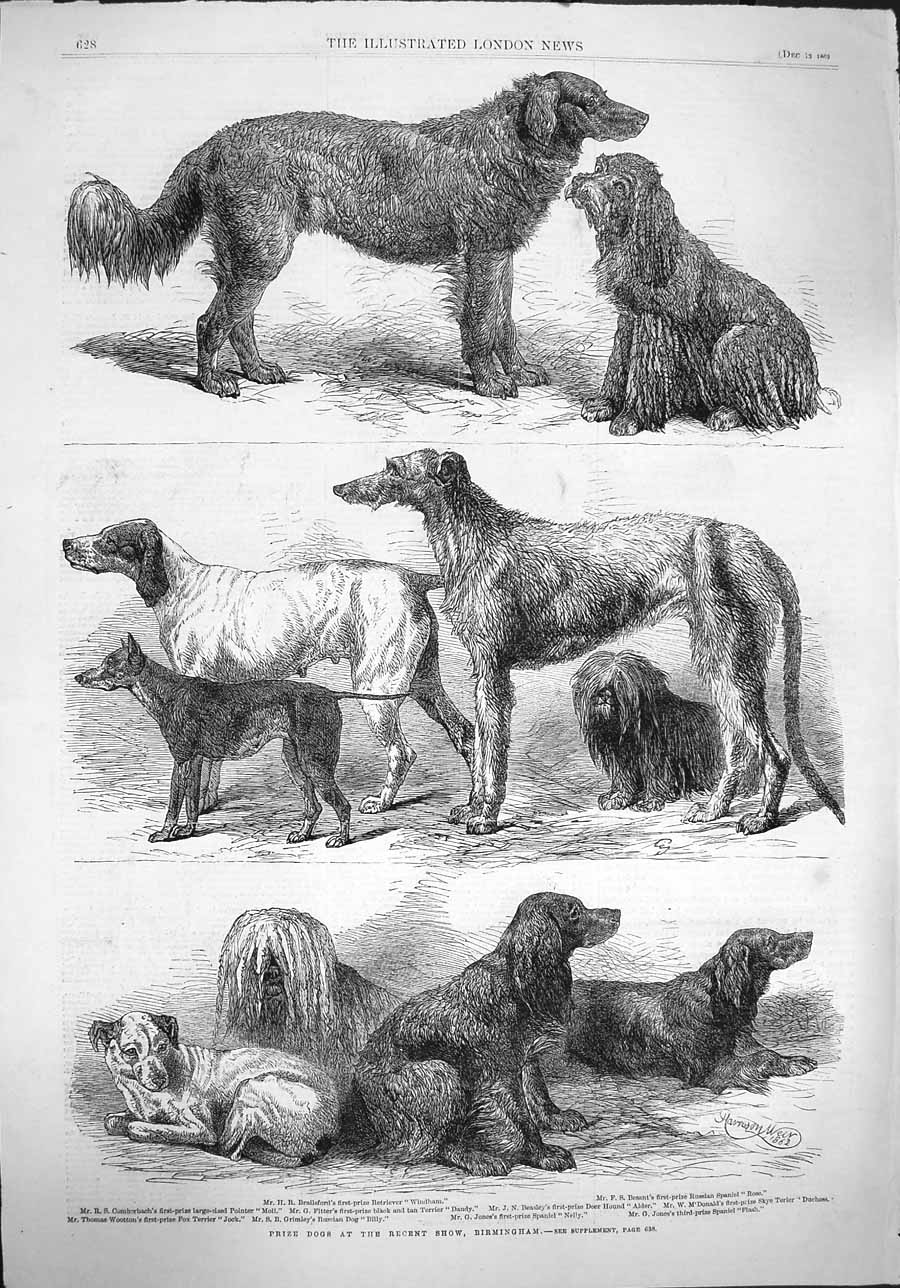 [Print 1862 Prize Dogs Show Birmingham Terrier Spaniel Nelly 628P141 Old Original]