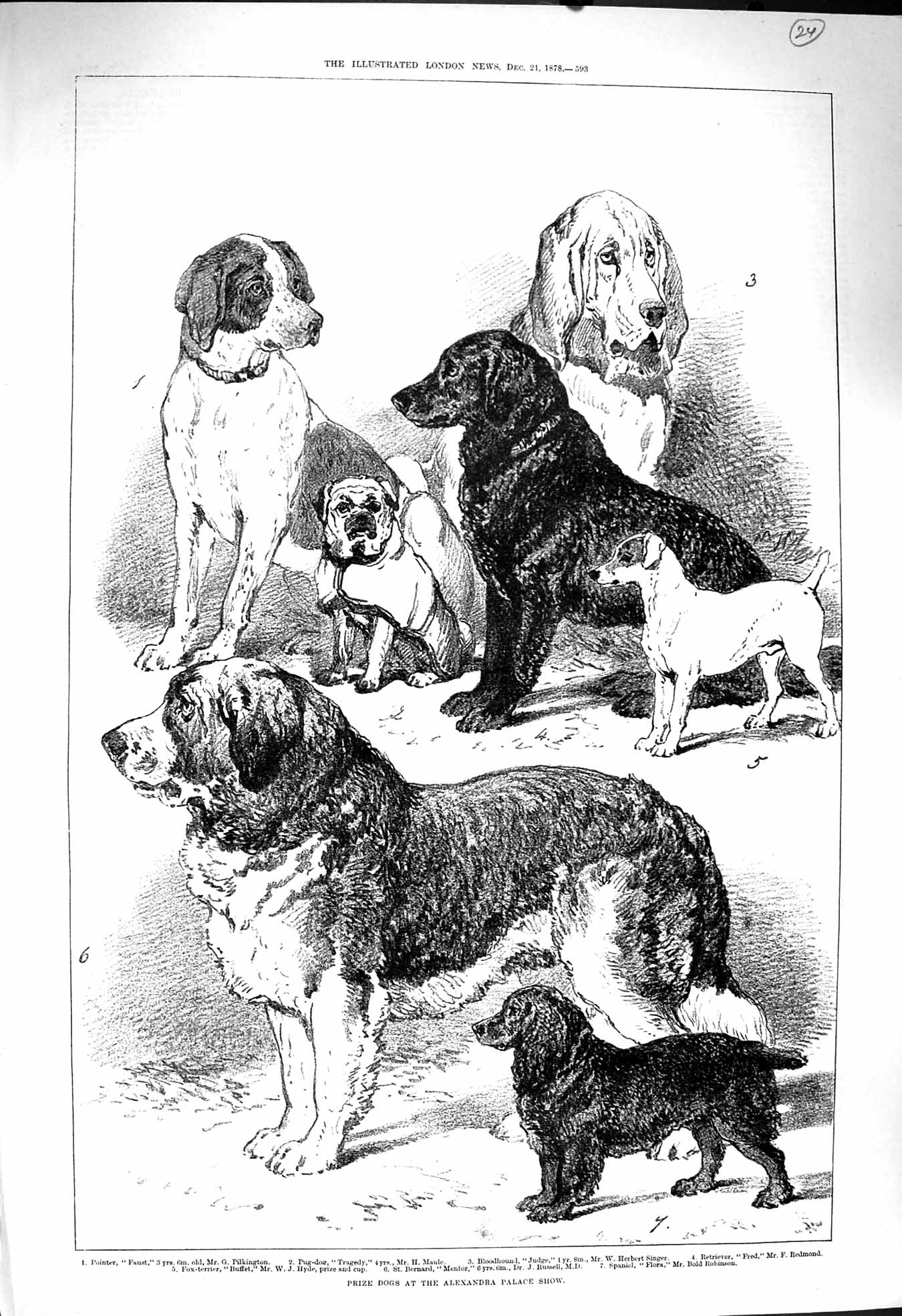 [Print 1878 Prize Dogs Alexandra Palace Show Pointer Spaniel 593P172 Old Original]
