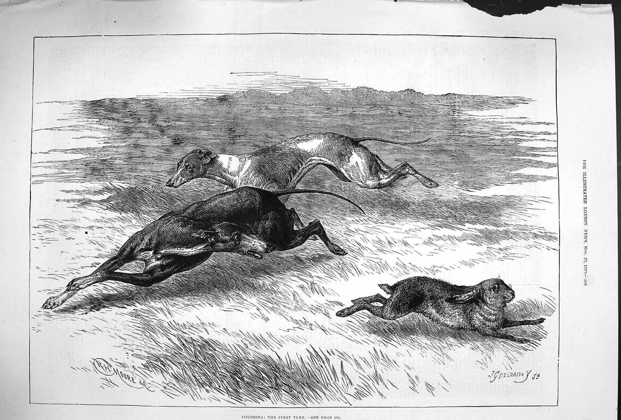 Print 1879 Hare Coursing Hounds Dogs Sport 501P175 Old Original