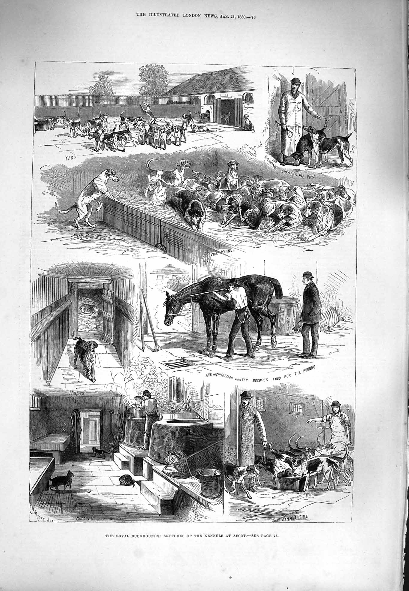 [Print 1880 Royal Buckhounds Dogs Kennels Ascot Horses Hunting 076P176 Old Original]