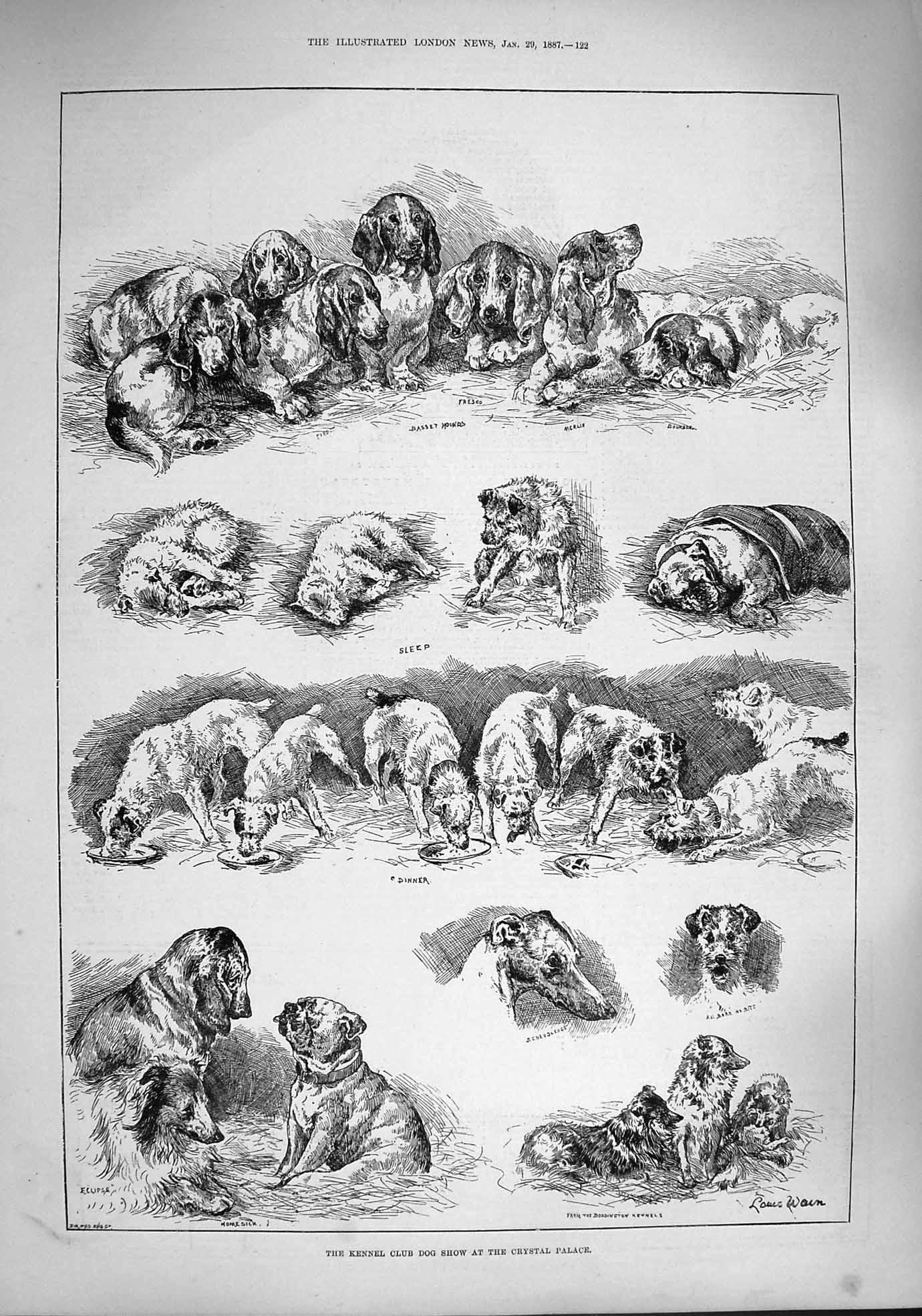 [Print 1887 Kennel Club Dog Show Crystal Palace Puppies 122P190 Old Original]