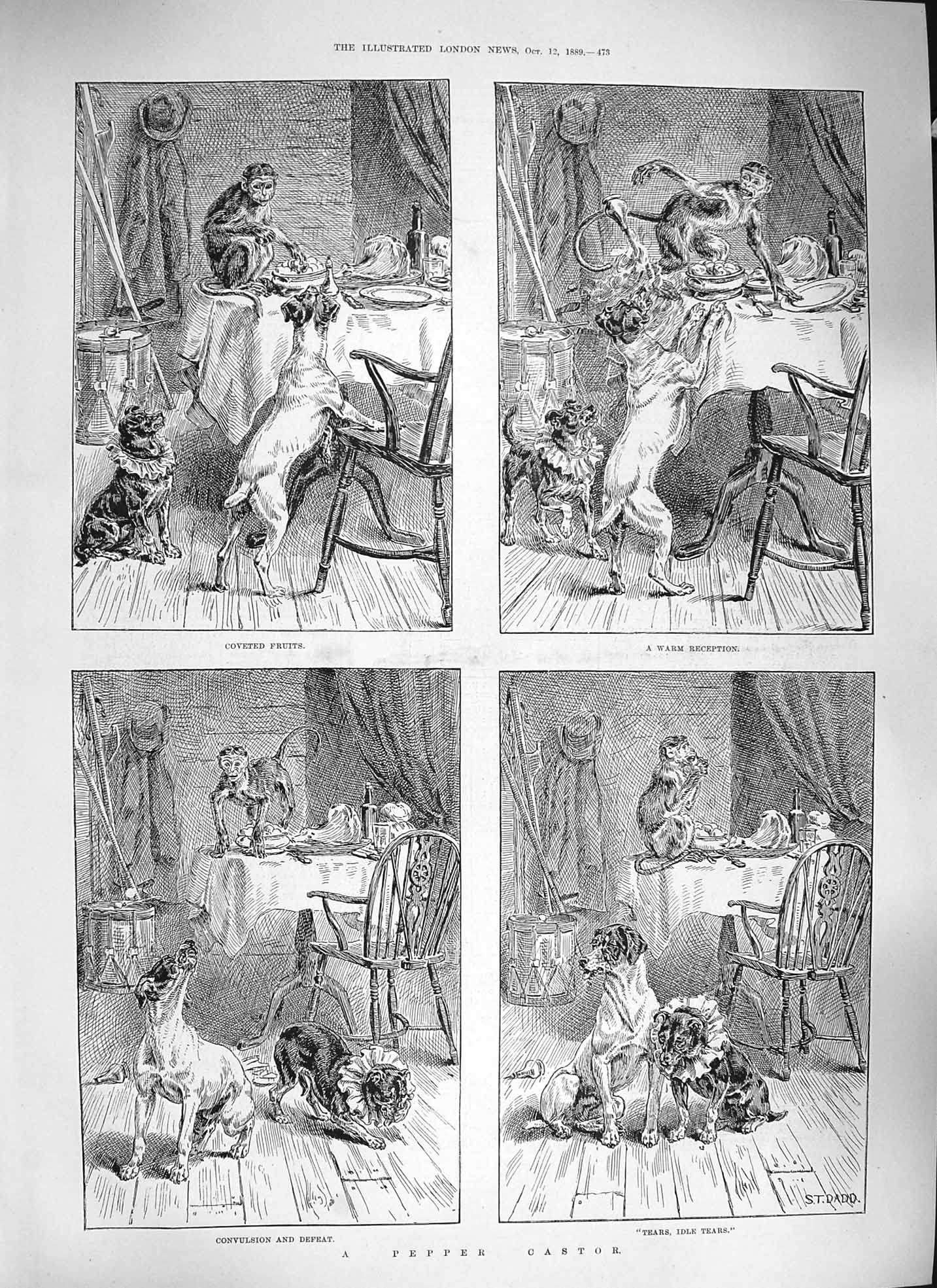 [Print Dadd 1889 Pepper Castor Monkey Dogs Cats Animals 473P195 Old Original]