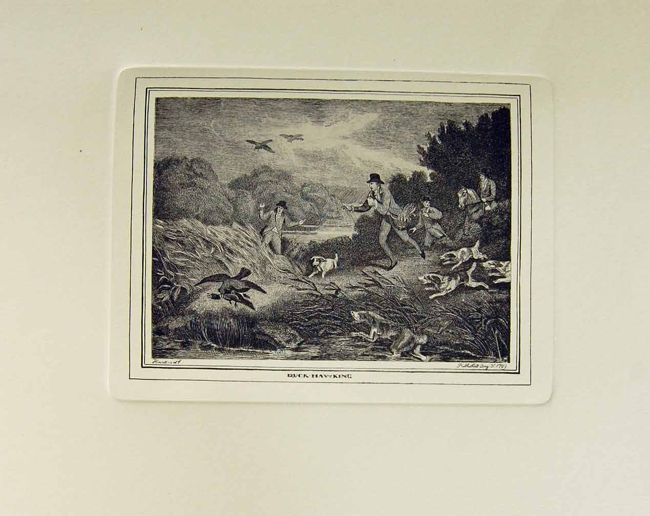 [Restrike Print Duck Hawking By S Howitt 1799 Falconry Old Original]