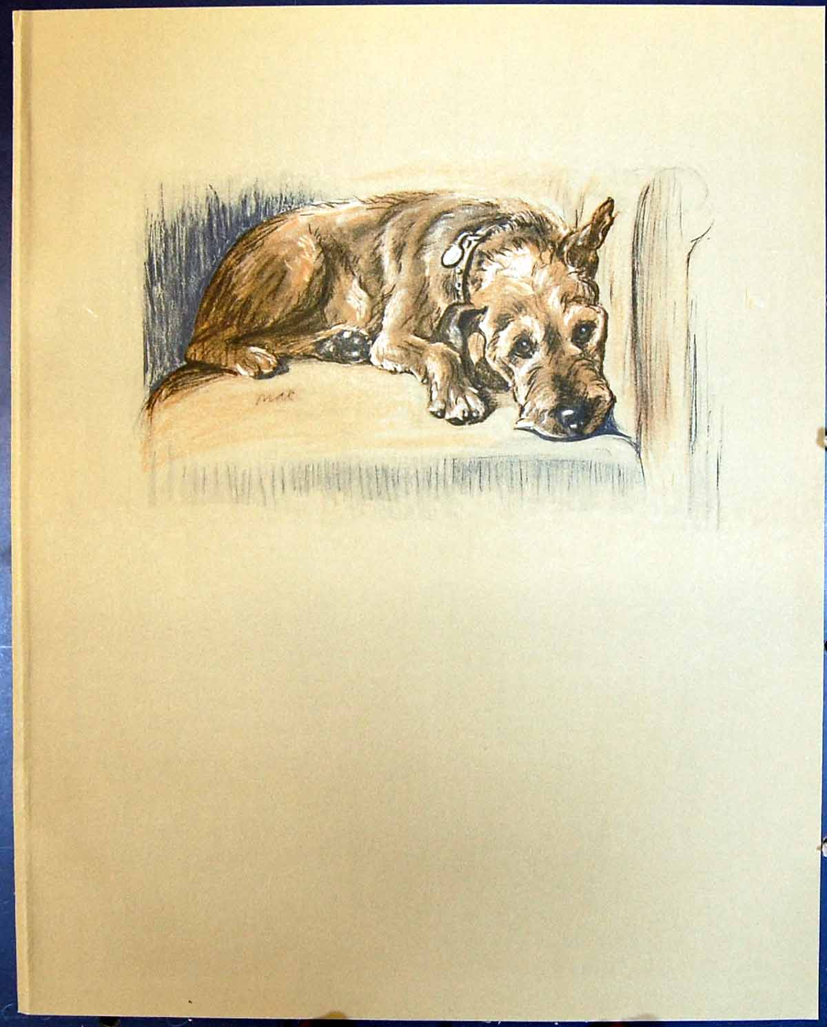 [Print Lucy Dawson Colour 1936 Dogs Patrick Terrier 101G344 Old Original]