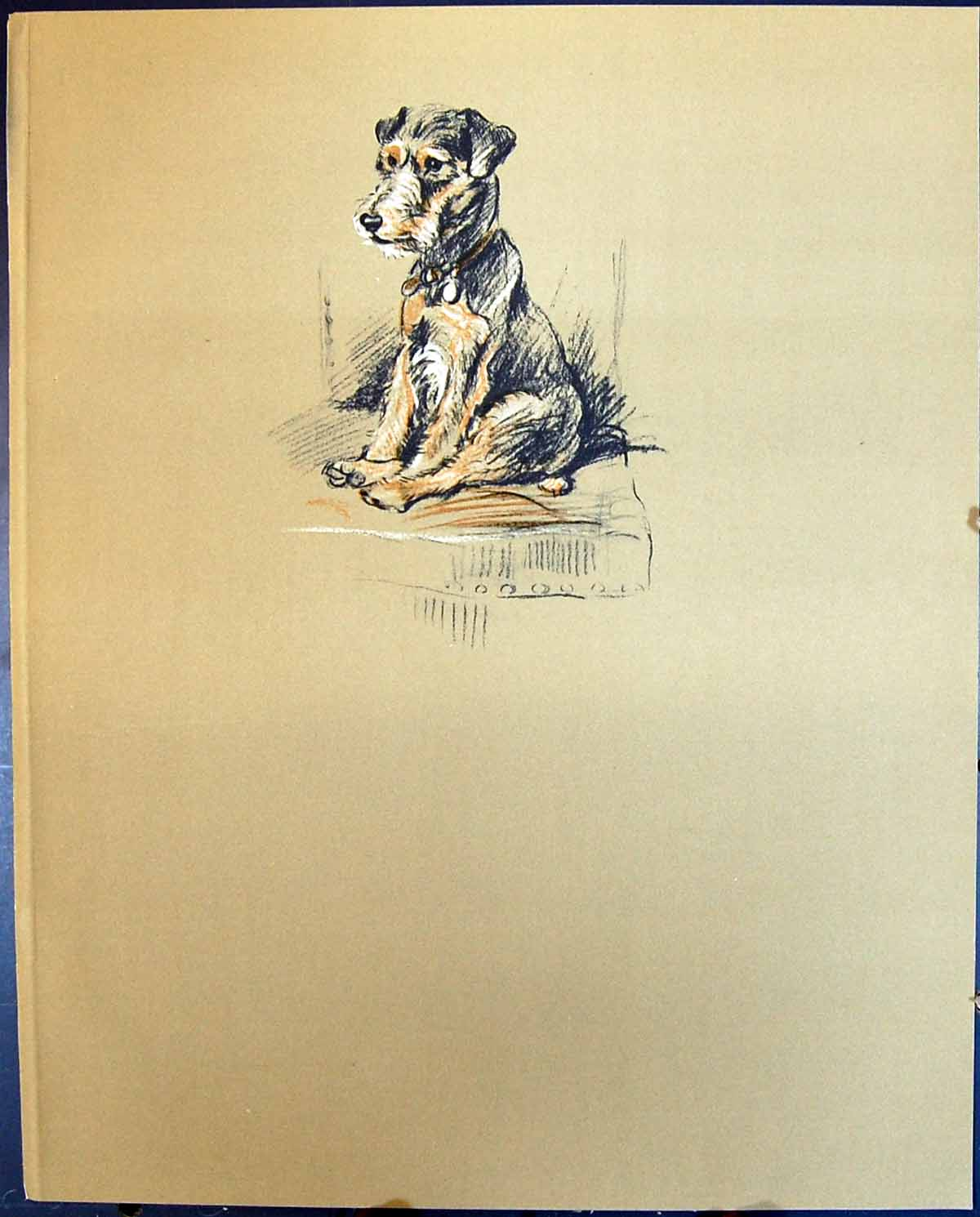 [Print Lucy Dawson Colour 1936 Dogs Trig Terrier 102G344 Old Original]