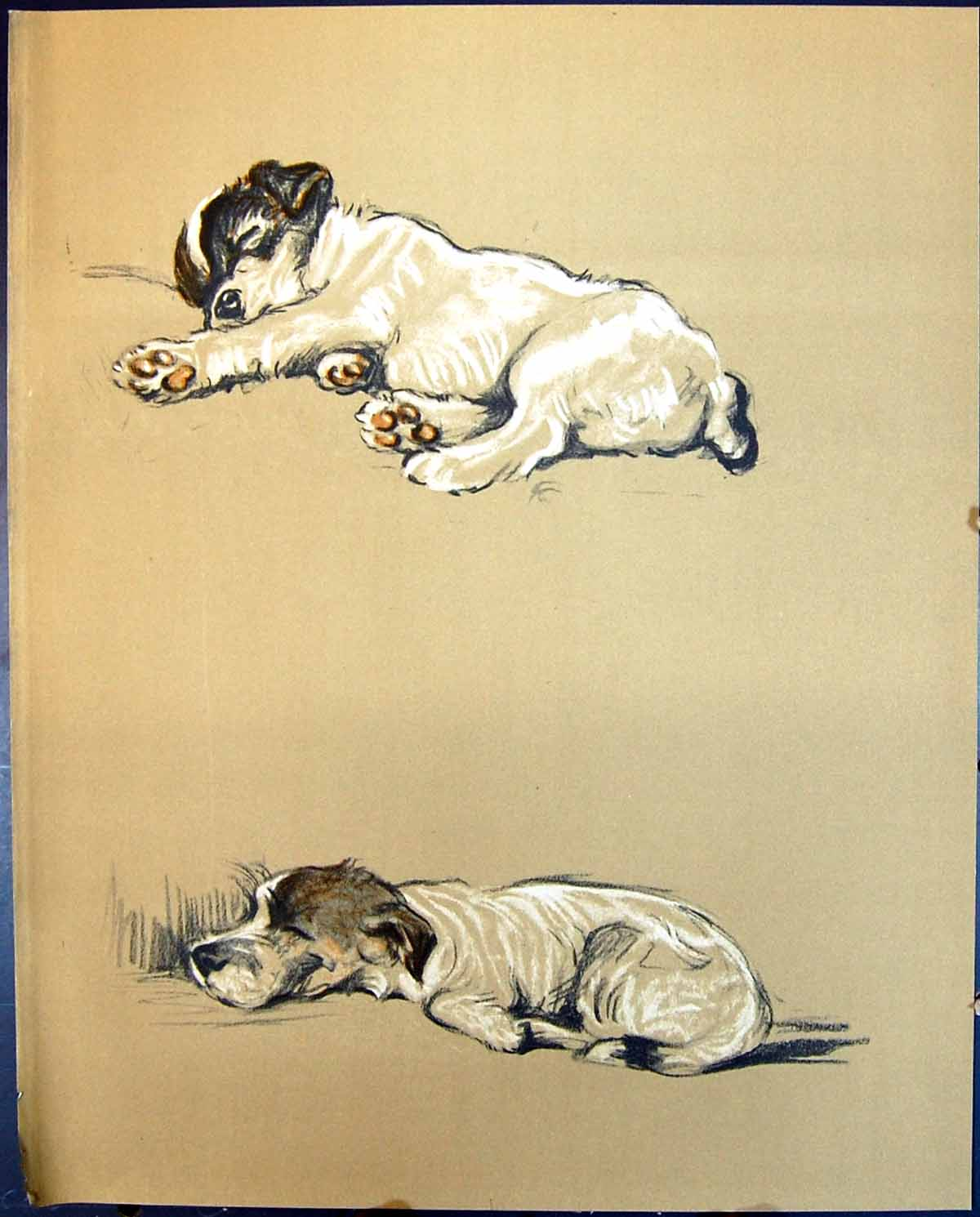 [Print Lucy Dawson Colour 1936 Dogs Mike Jack Russell 105G344 Old Original]