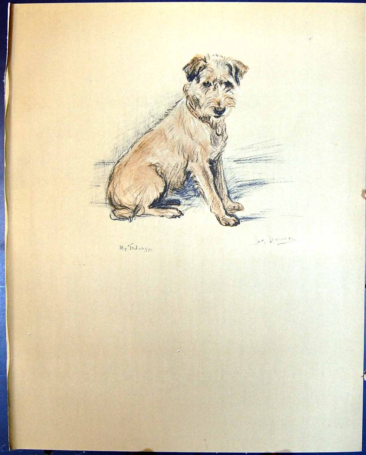 [Print Lucy Dawson Colour 1936 Dogs Bob 119G344 Old Original]