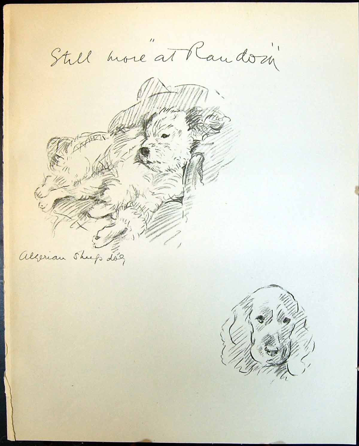 [Print Algerian Sheep Dogs Lucy Dawson 1936 123G344 Old Original]