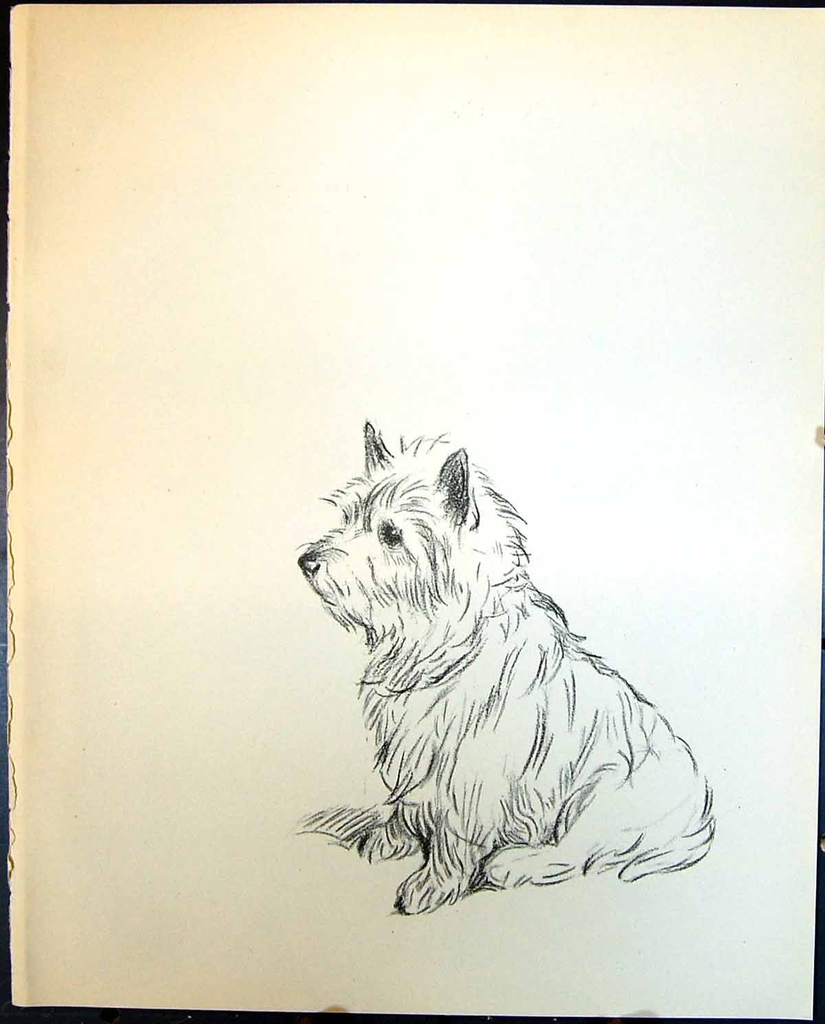 [Print Terrier Dogs Lucy Dawson 1936 124G344 Old Original]