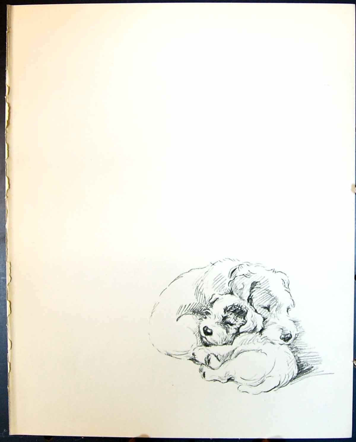 [Print Sleeping Dogs Lucy Dawson 1936 127G344 Old Original]