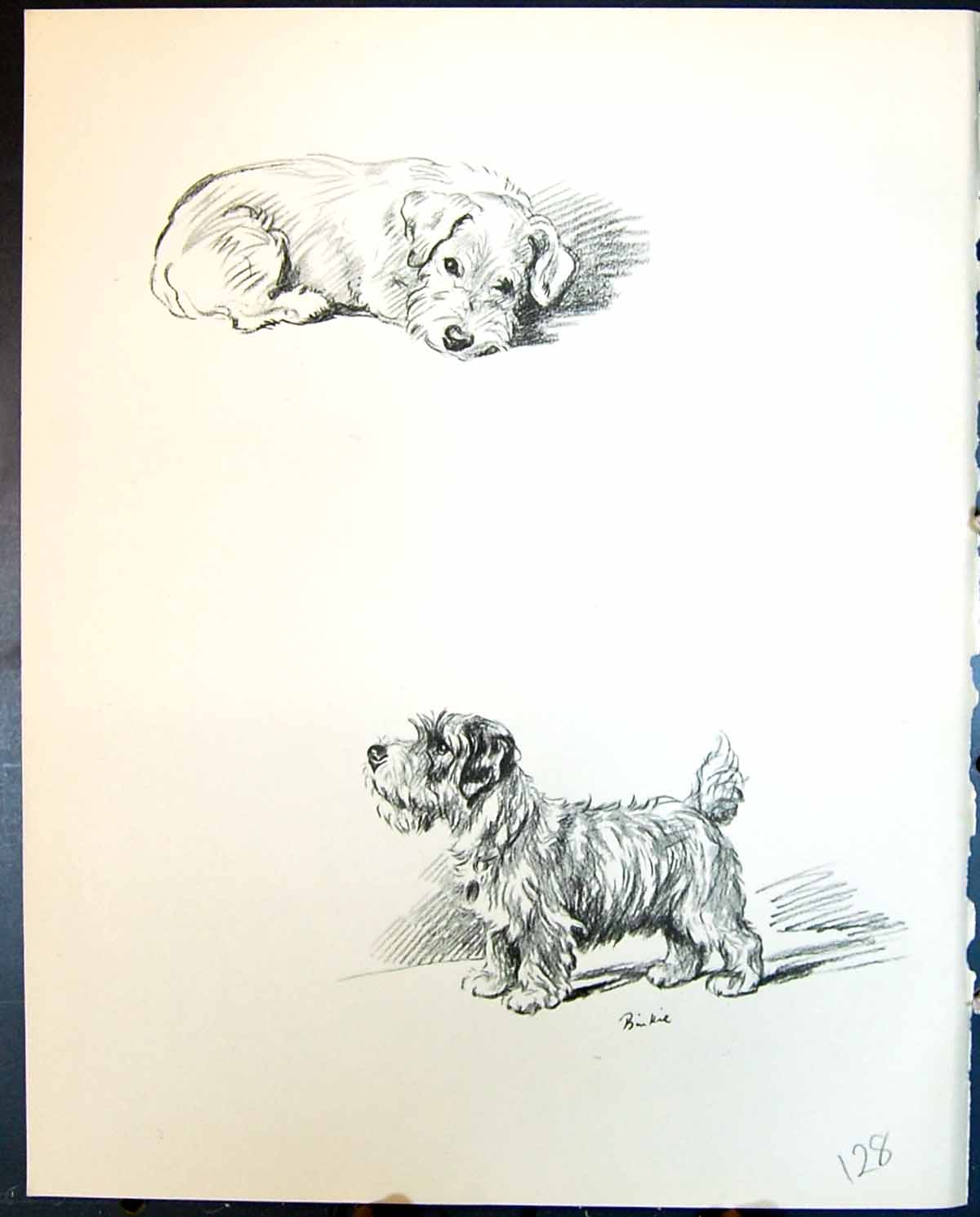 [Print Binkie Terrier Pet Dogs Animals Lucy Dawson 1936 128G344 Old Original]