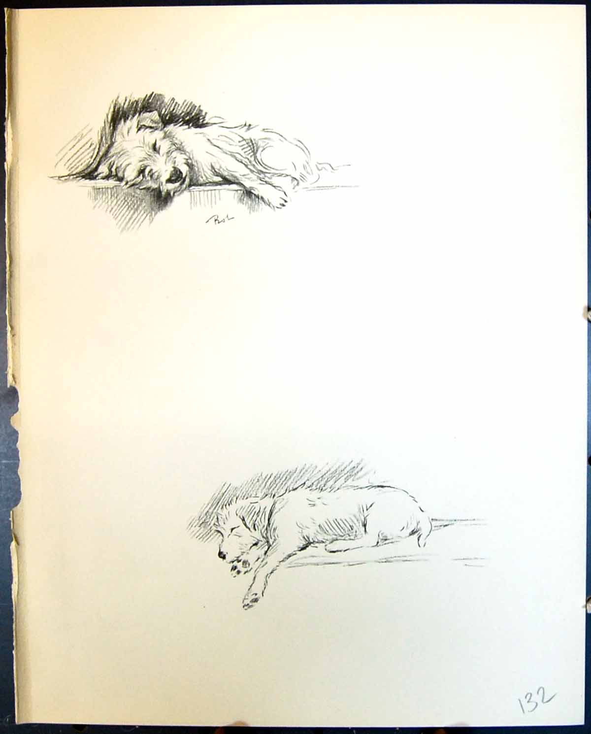 [Print Rob Terrier Sleeping Pet Dogs Animals Lucy Dawson 1936 132G344 Old Original]