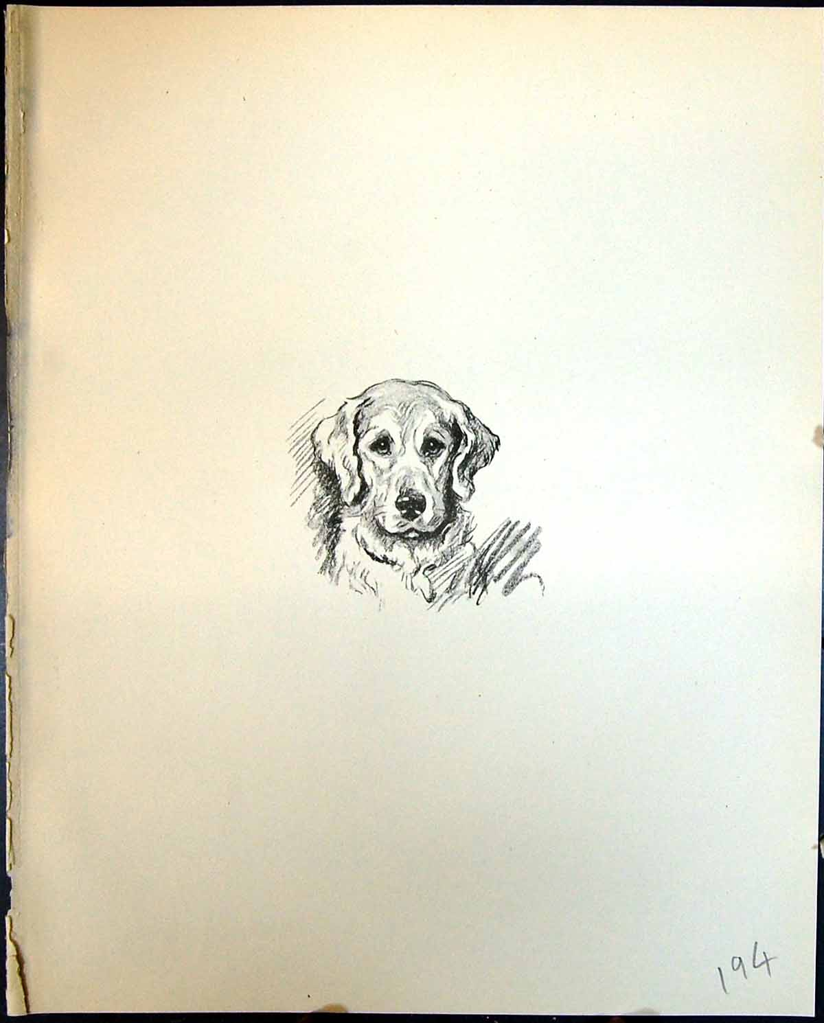 [Print Caliph Pads Paws Pet Dogs Animals Lucy Dawson 1936 194G344 Old Original]
