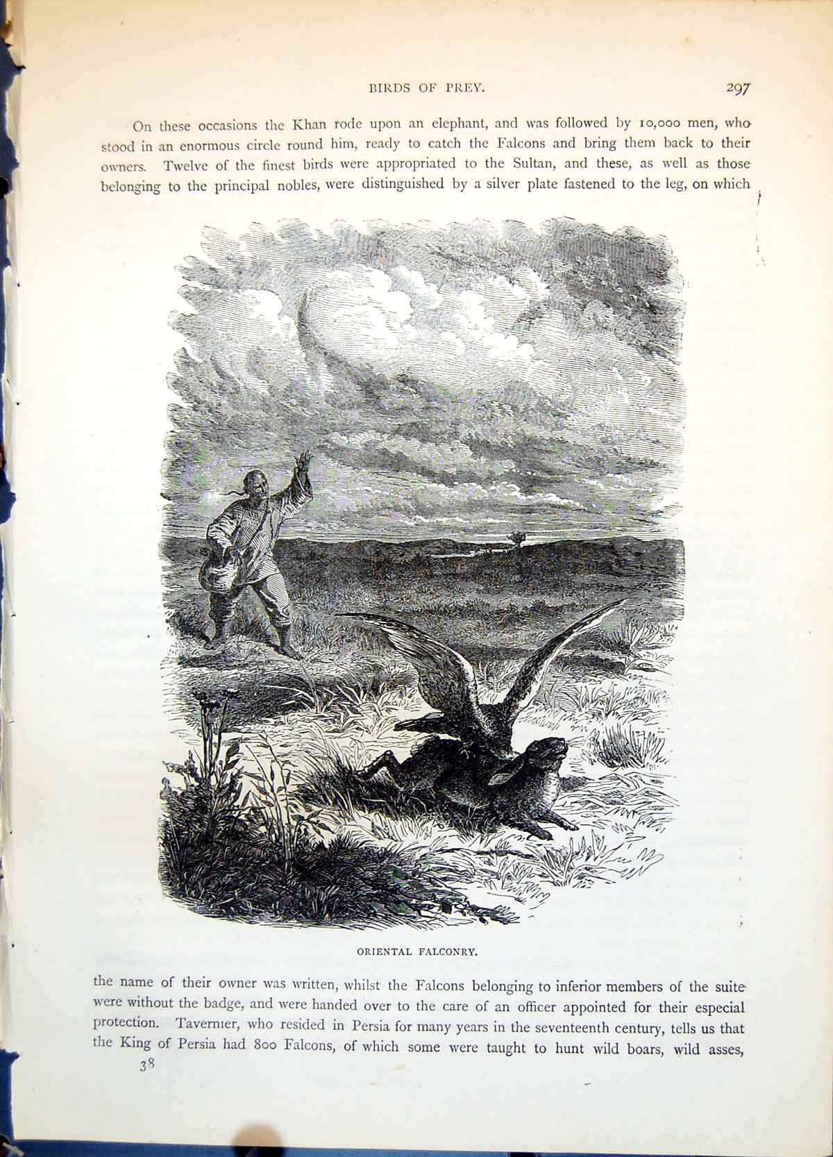 [Print Oriental Falconry Man Catching Hare Rabbit Open Ground C1874 285G363 Old Original]