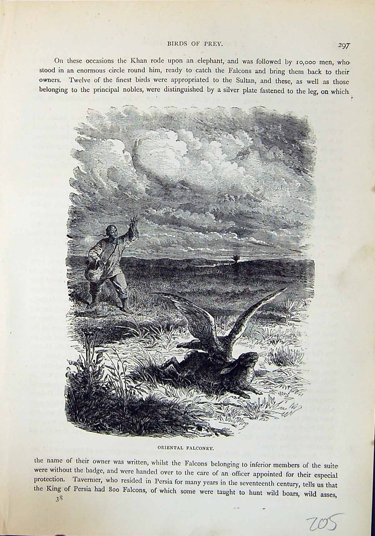 [Print Brehm Jones C1860 Cassell'S Birds Oriental Falconry Hunting Hare 205H219 Old Original]