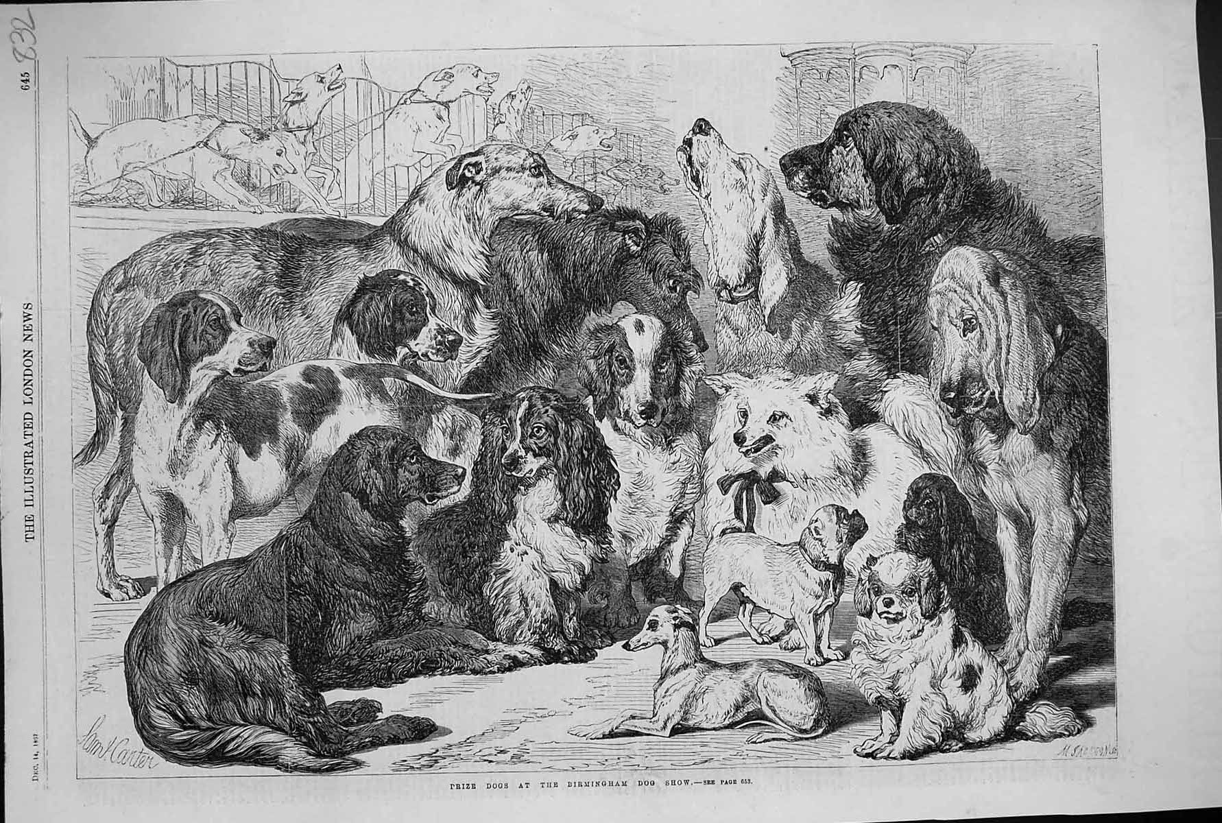 [Print 1867 Prize Dogs Birmingham Show Pets Animals 832J303 Old Original]