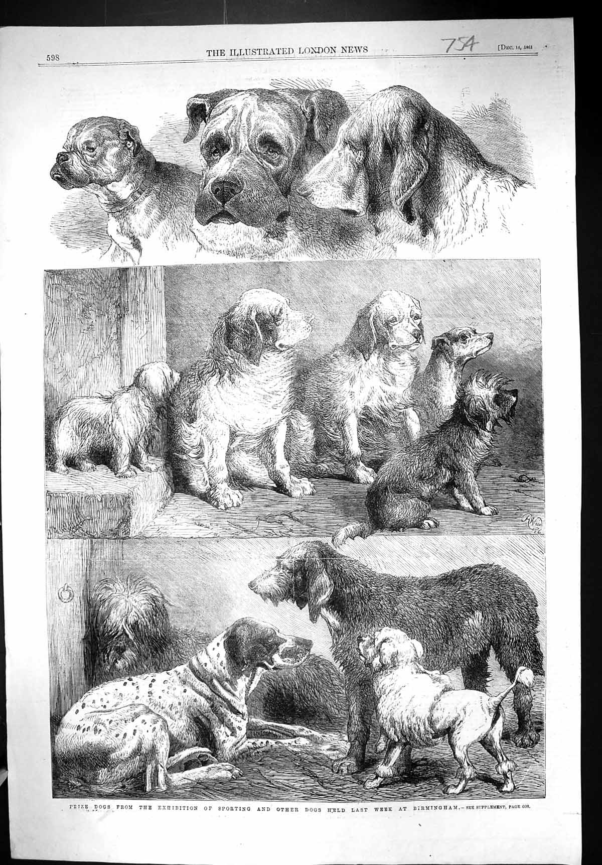 [Print 1861 Prize Dogs Exhibition Sporting Animals Birmingham England 754J306 Old Original]