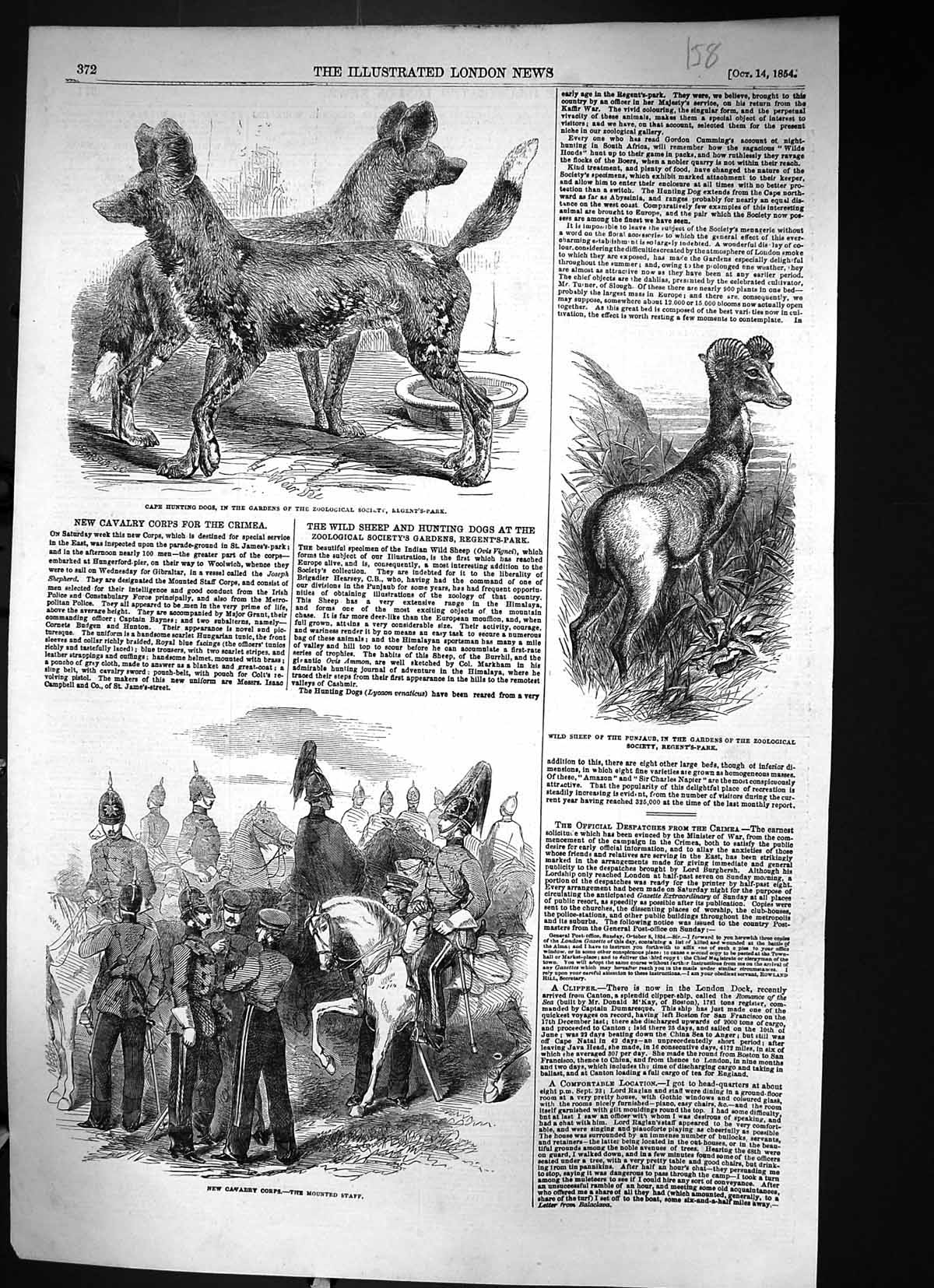 [Print 1854 Cape Hunting Dogs Wild Sheep Punjaub Cavalry Troops Mounted 158J310 Old Original]