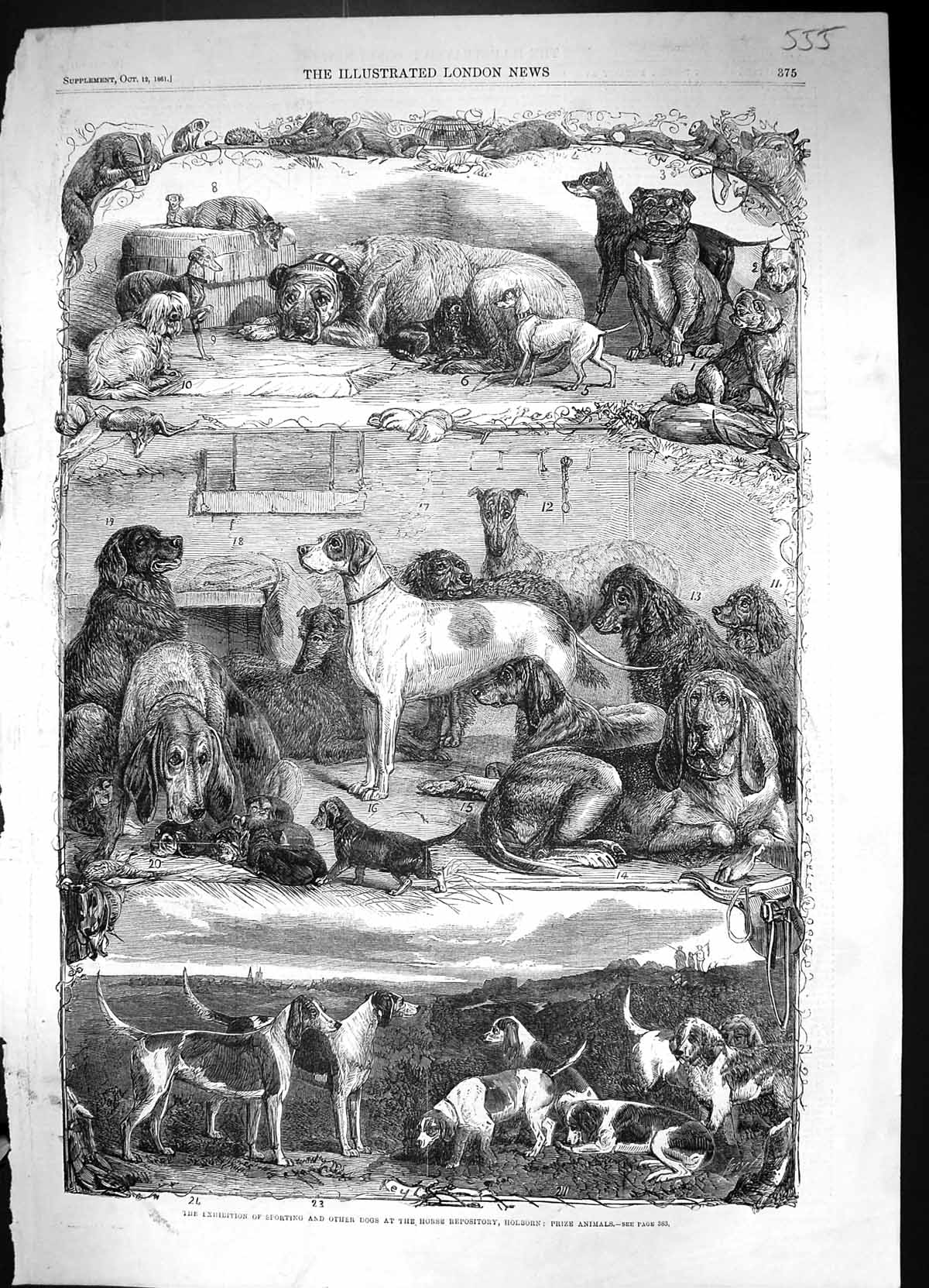 [Print 1861 Exhibition Sporting Dogs Horse Repository Holborn Prize Anim 555J320 Old Original]