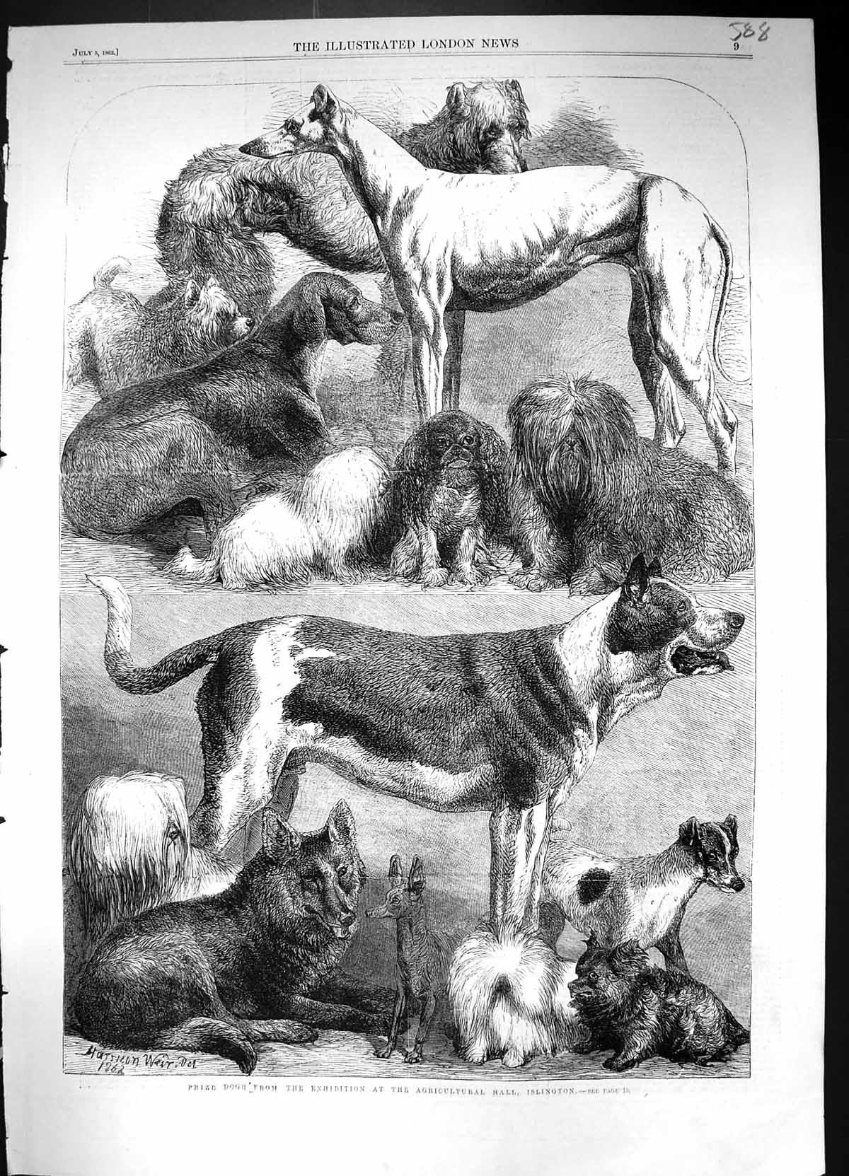 [Print 1862 Prize Dogs Exhibition Agricultural Hall Islington Harrison W 588J320 Old Original]