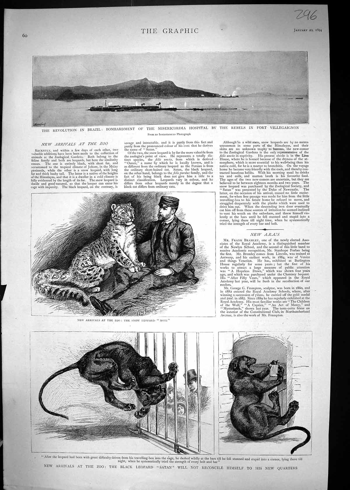 [Print 1894 Brazil Misericordia Hospital Villegaignon Zoo Black Leopard 296J328 Old Original]