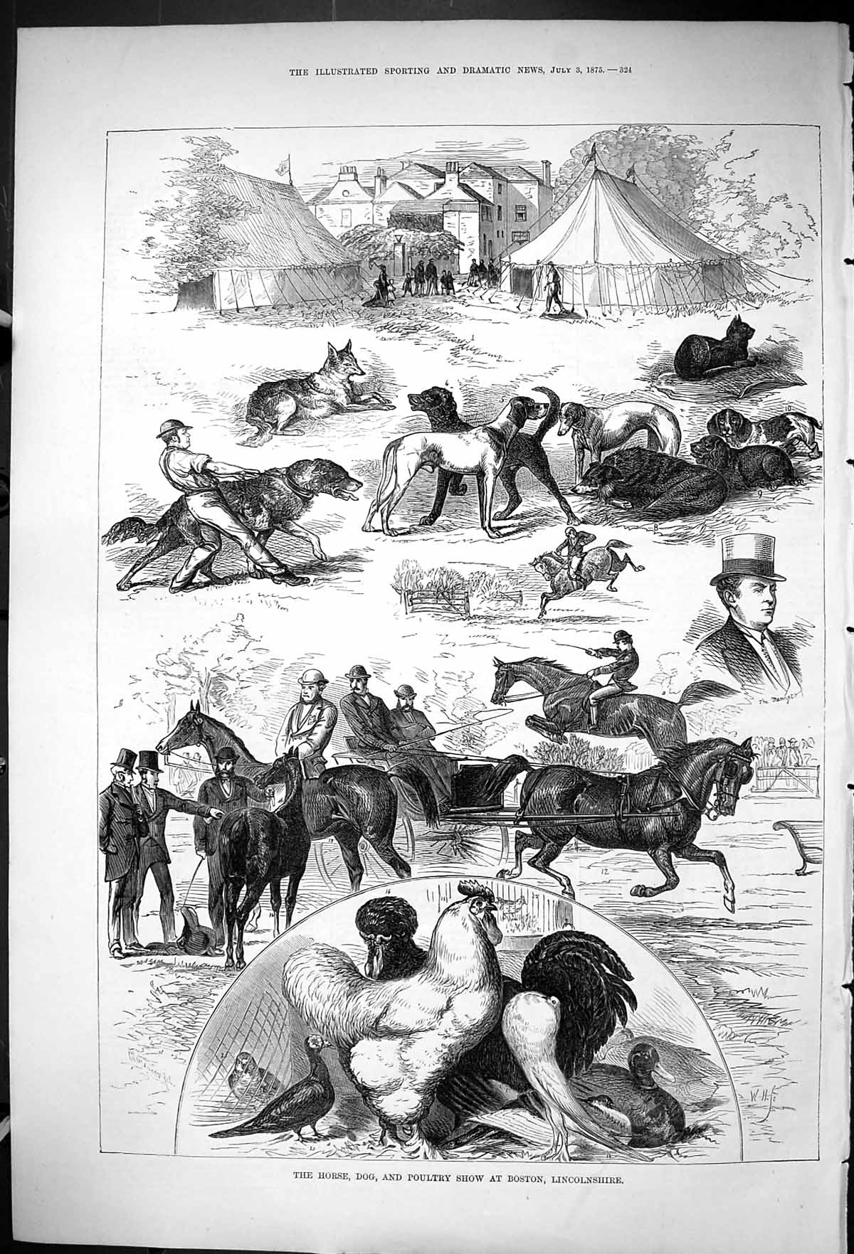 [Print 1875 Horse Dog Poultry Show Boston Lincolnshire Animals 324J403 Old Original]